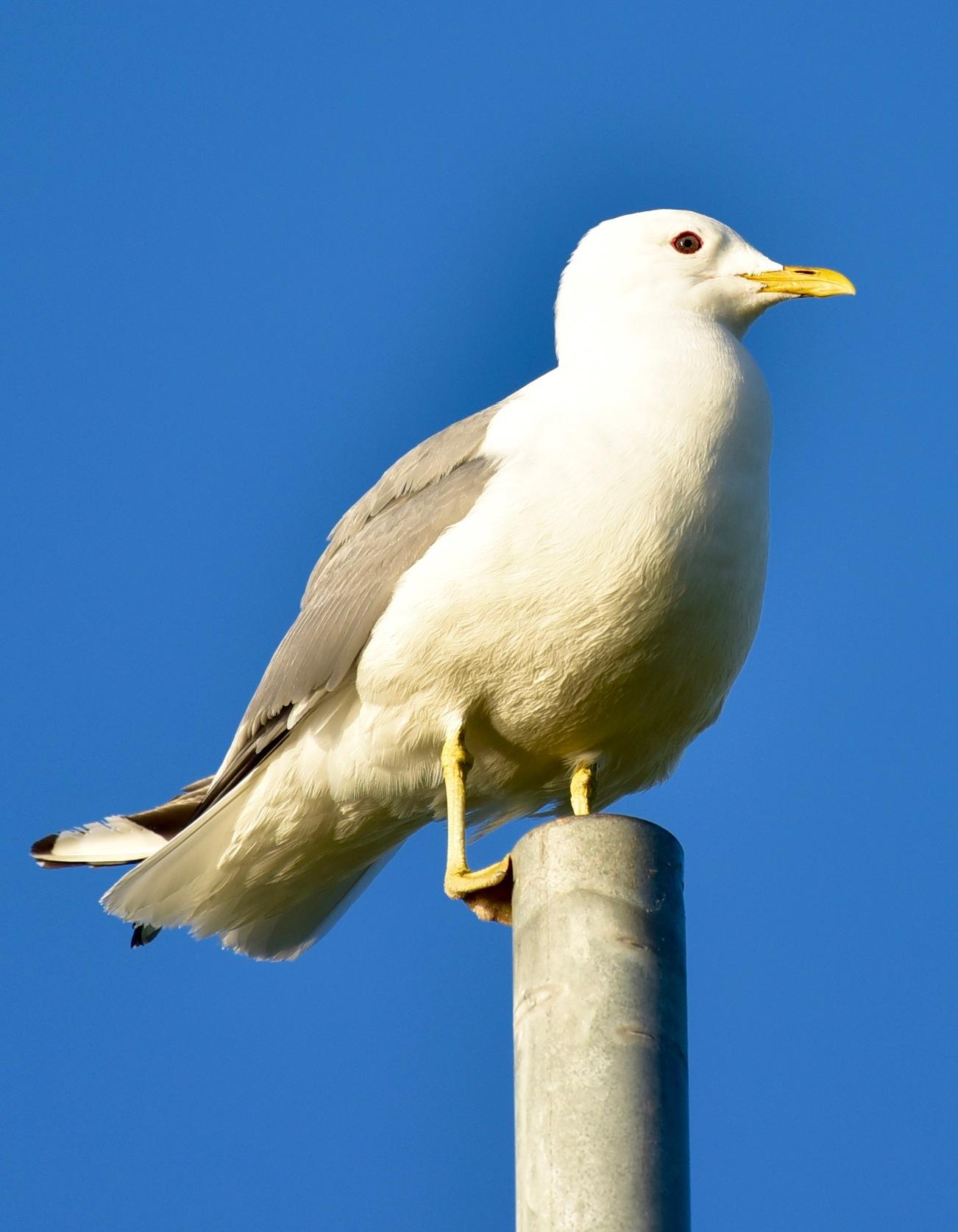 Bird 4422! by Memed Bayatli