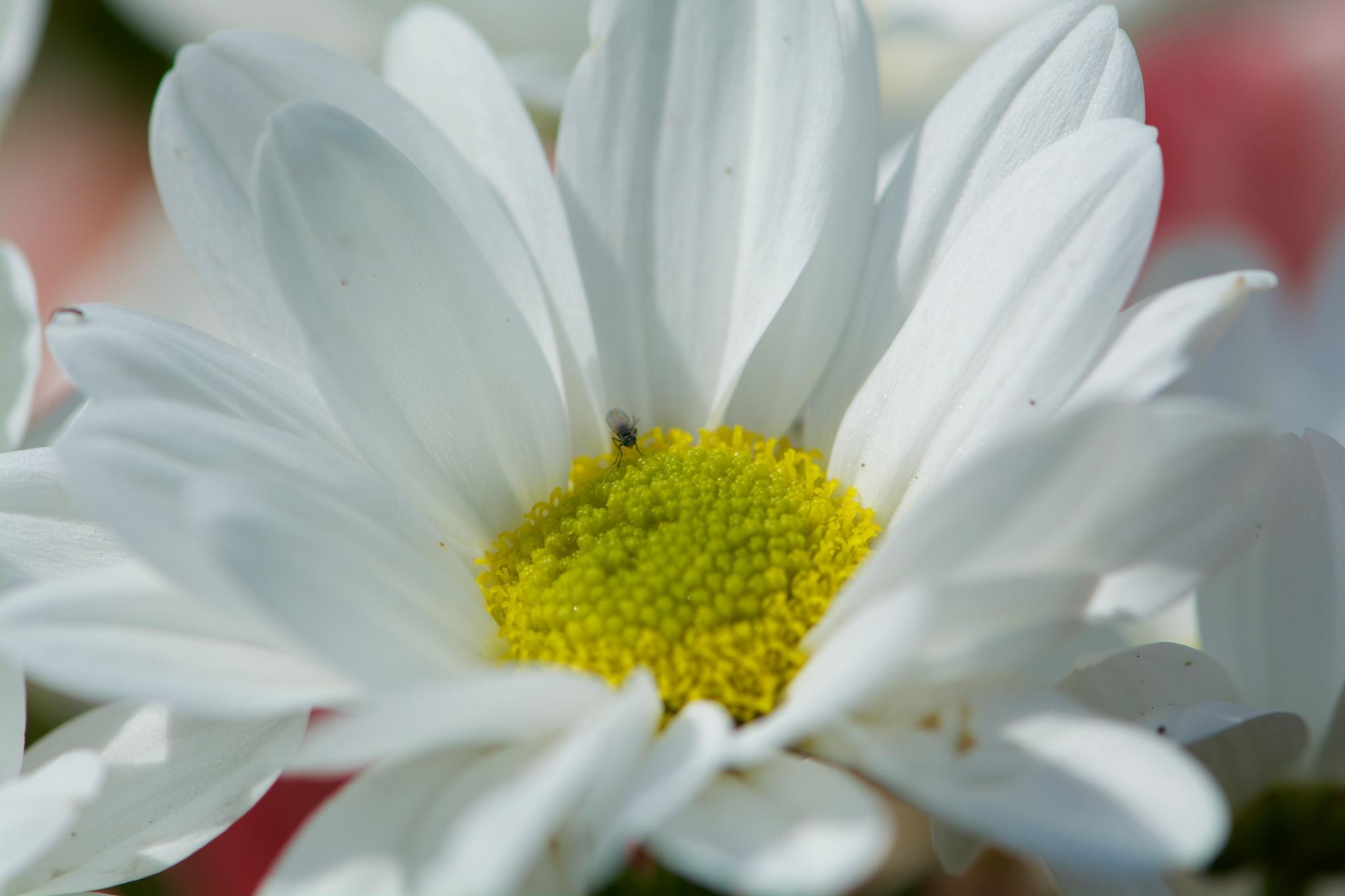 Flowers 171! by Memed Bayatli