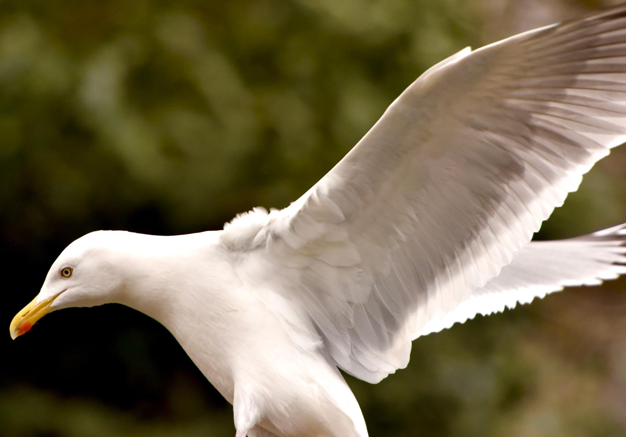 Bird 499! by Memed Bayatli