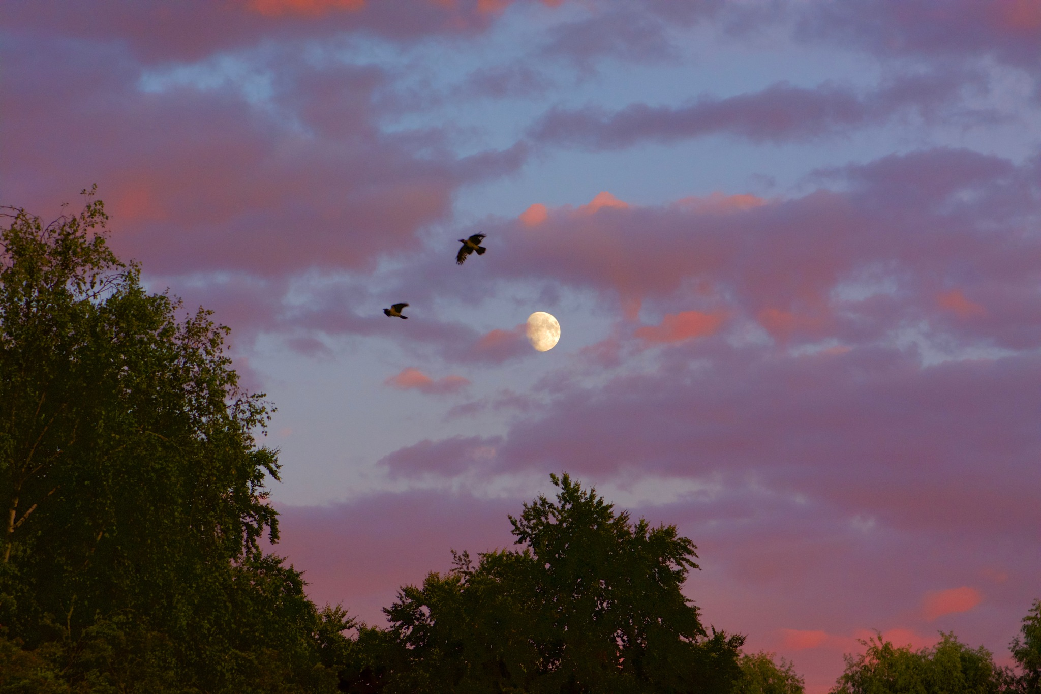 Moon & Bird 54! by Memed Bayatli
