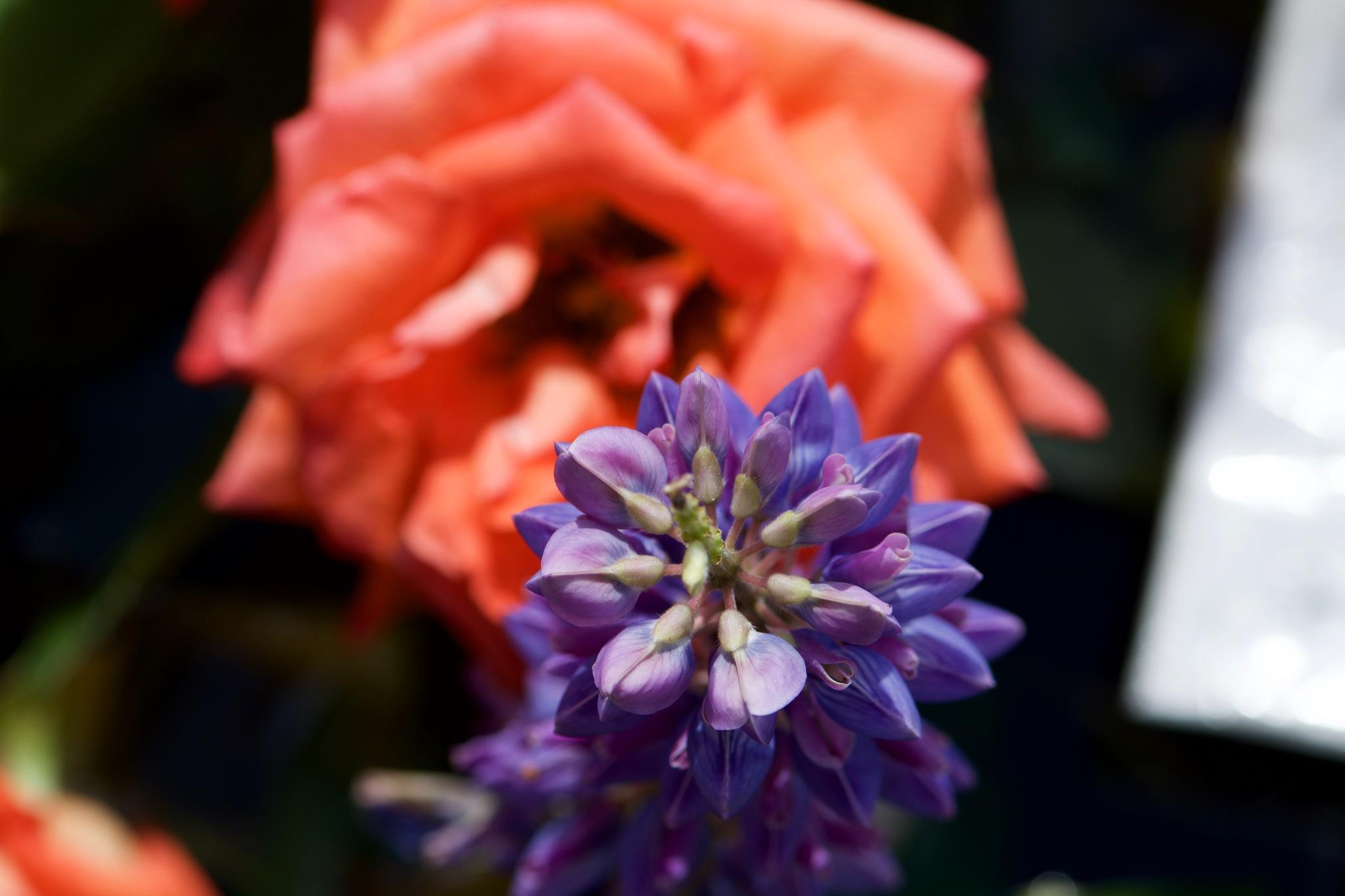 Flowers 147! by Memed Bayatli