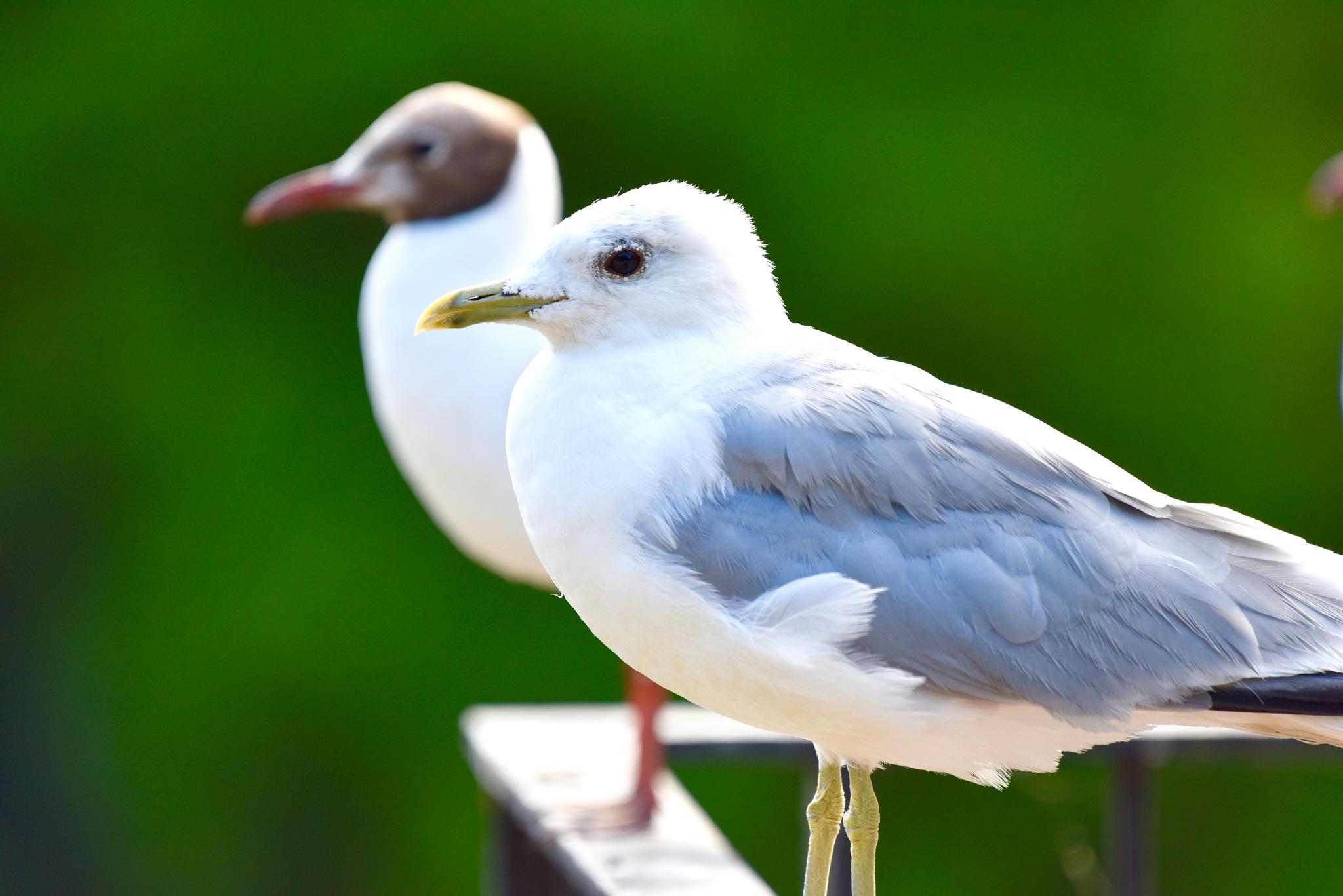 Bird 341! by Memed Bayatli