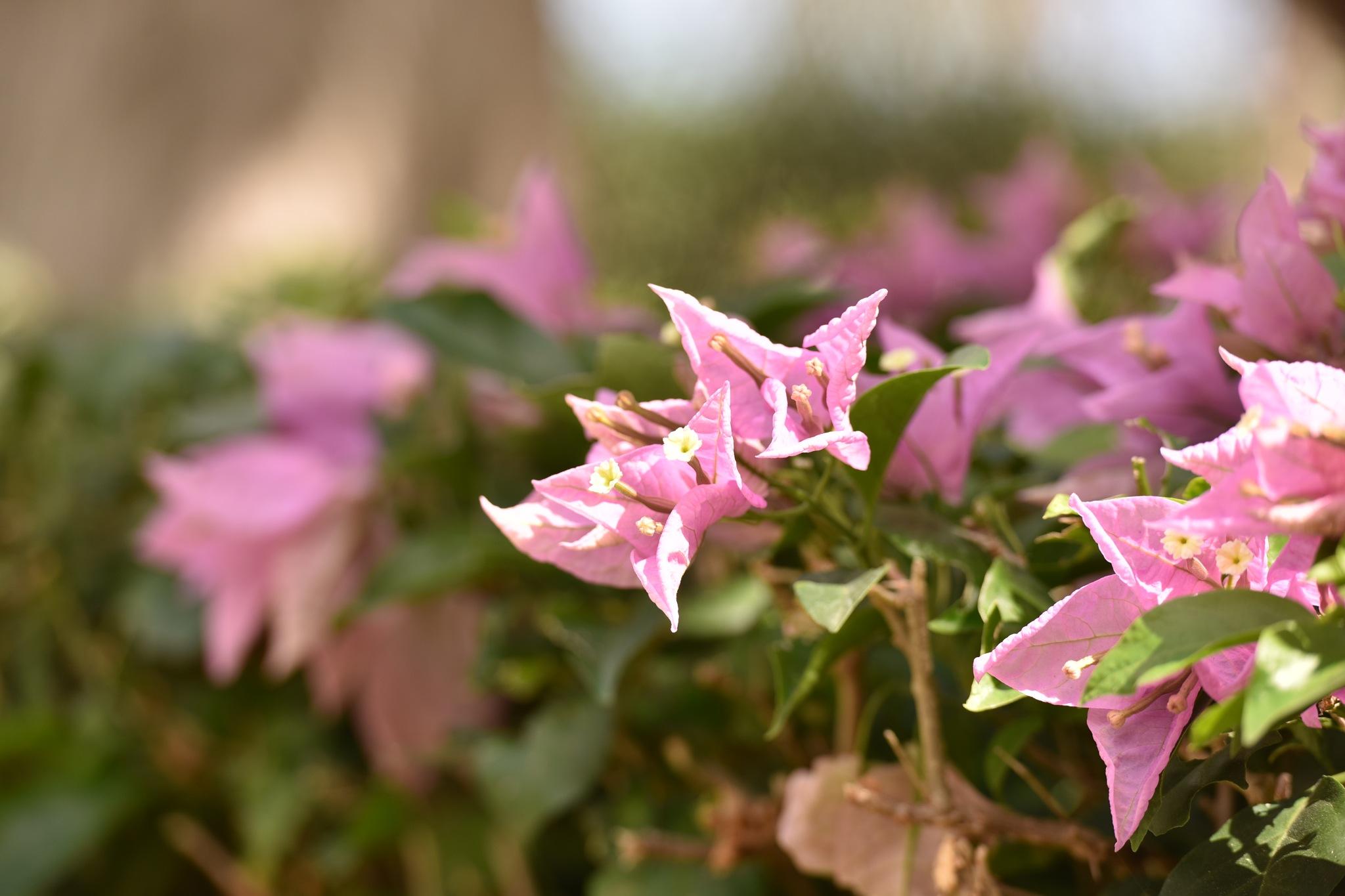 Flowers 592! by Memed Bayatli