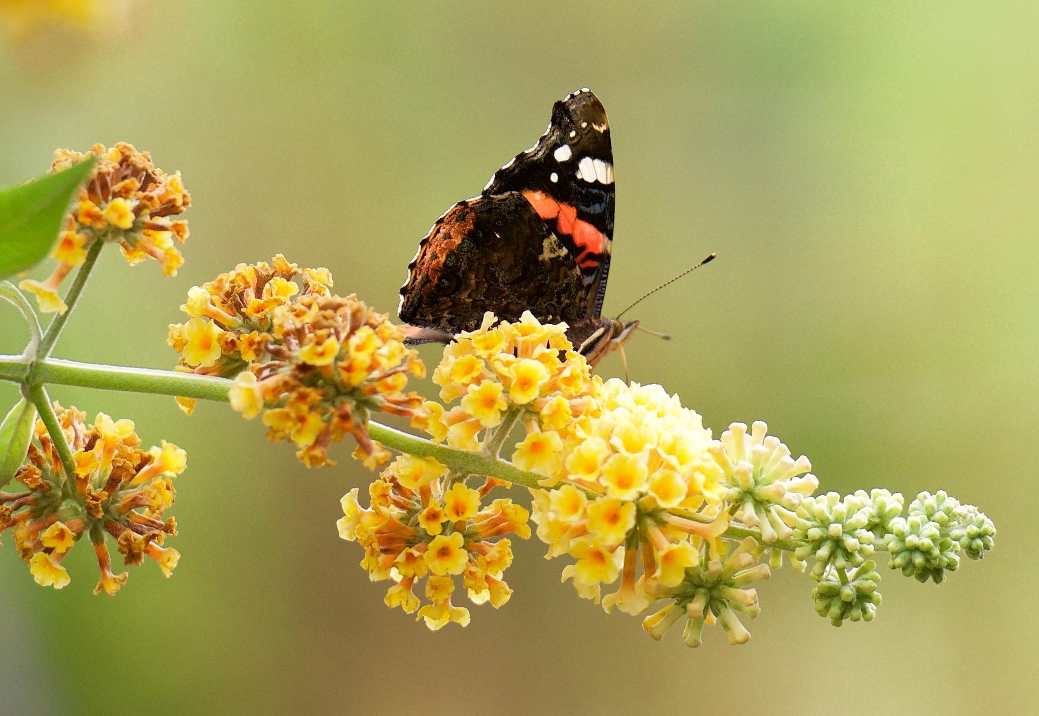 Butterfly 200! by Memed Bayatli