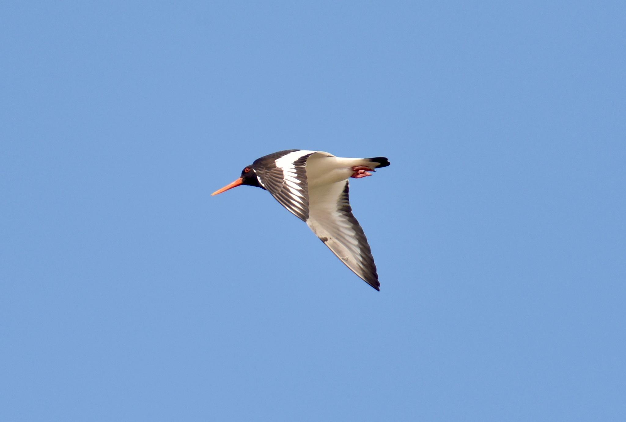 Bird 433! by Memed Bayatli