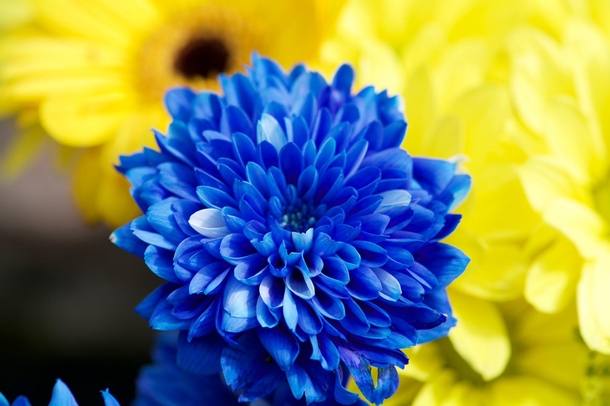 Flowers 124! by Memed Bayatli