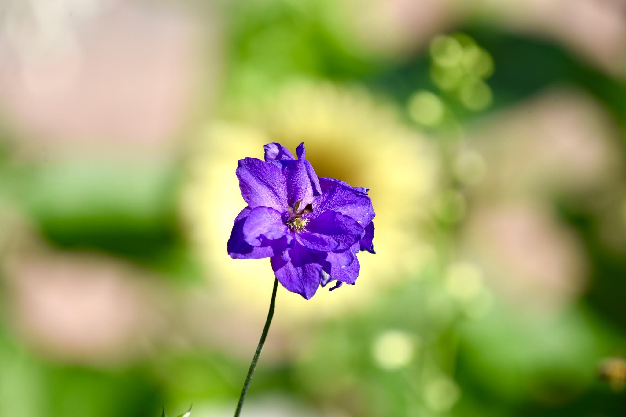 Flower 890! by Memed Bayatli