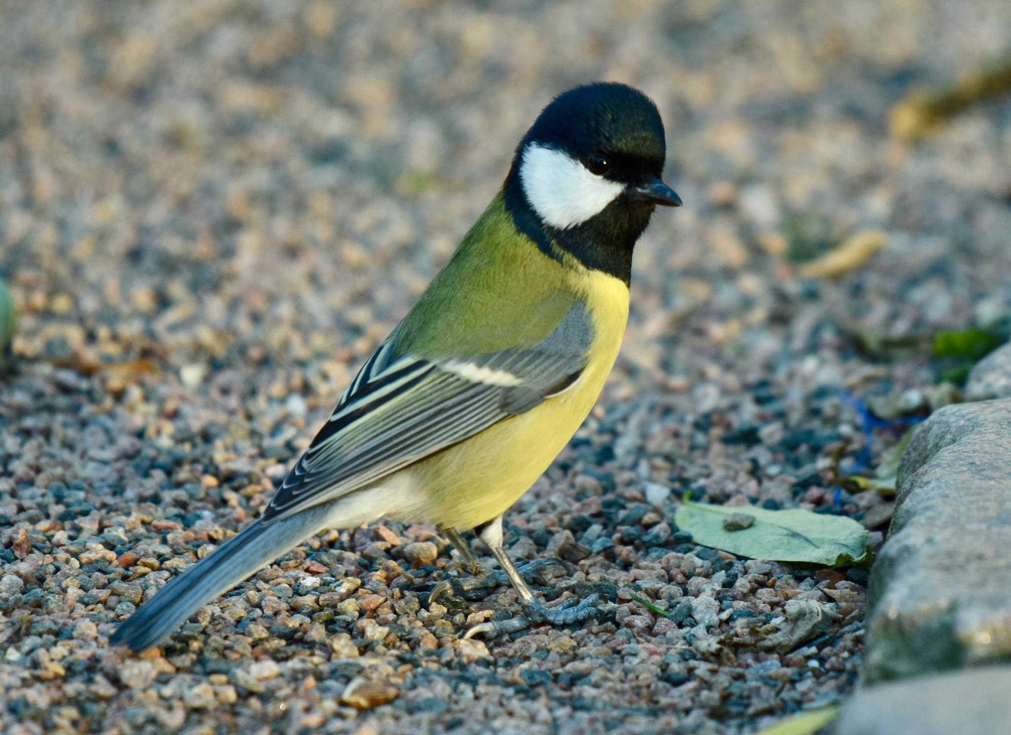 Bird 2998! by Memed Bayatli