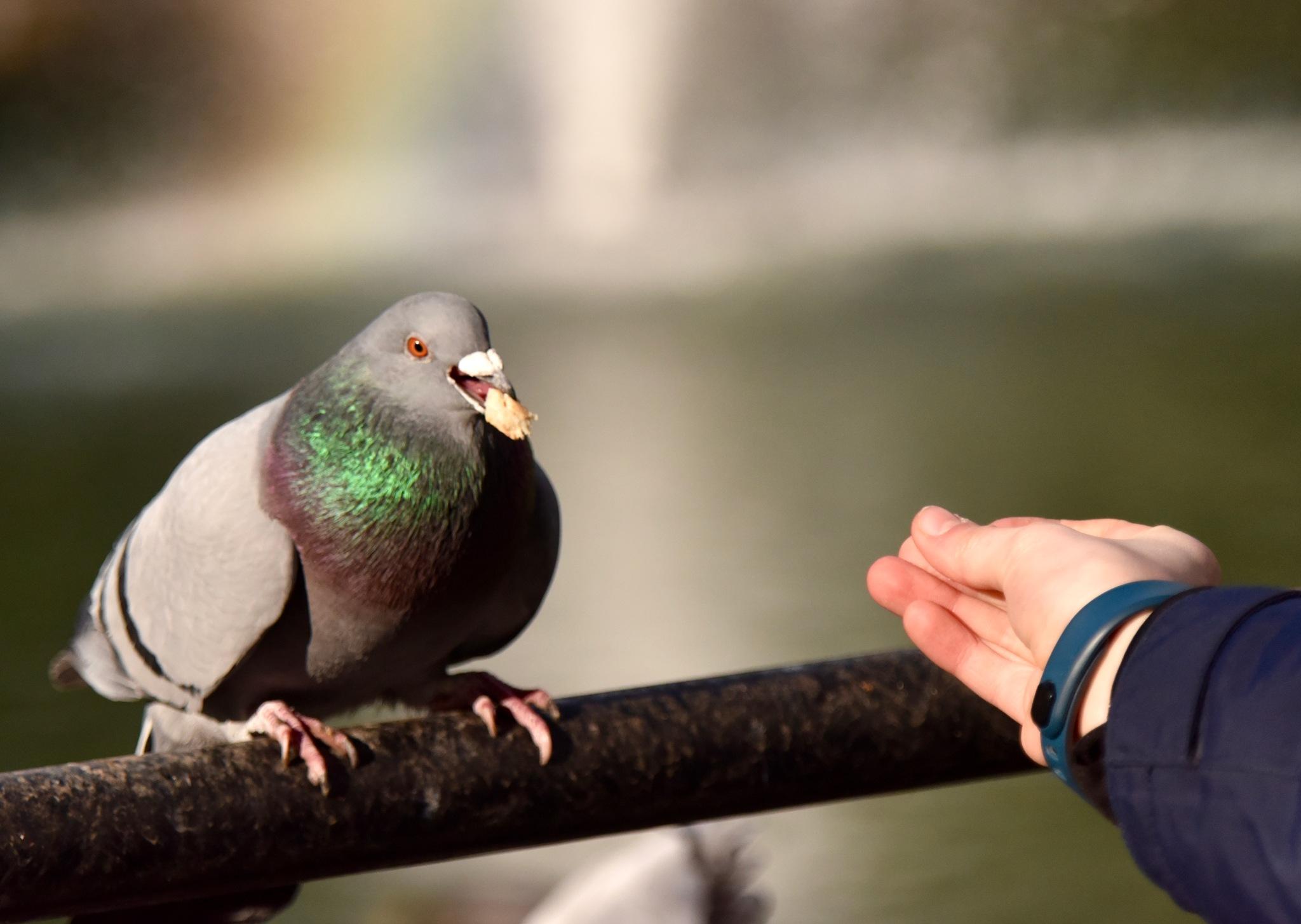 Bird 33! by Memed Bayatli