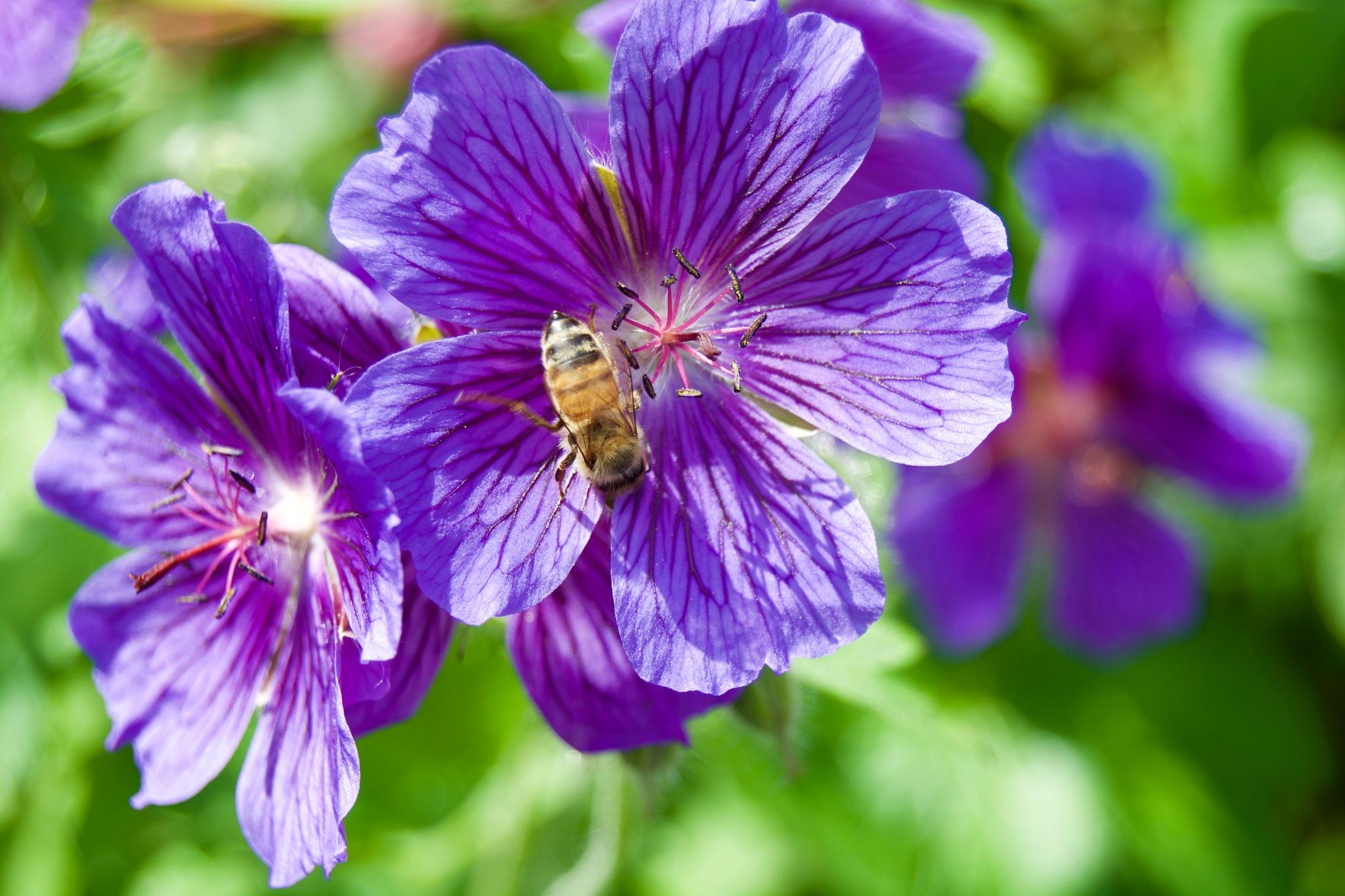 Bee 192! by Memed Bayatli