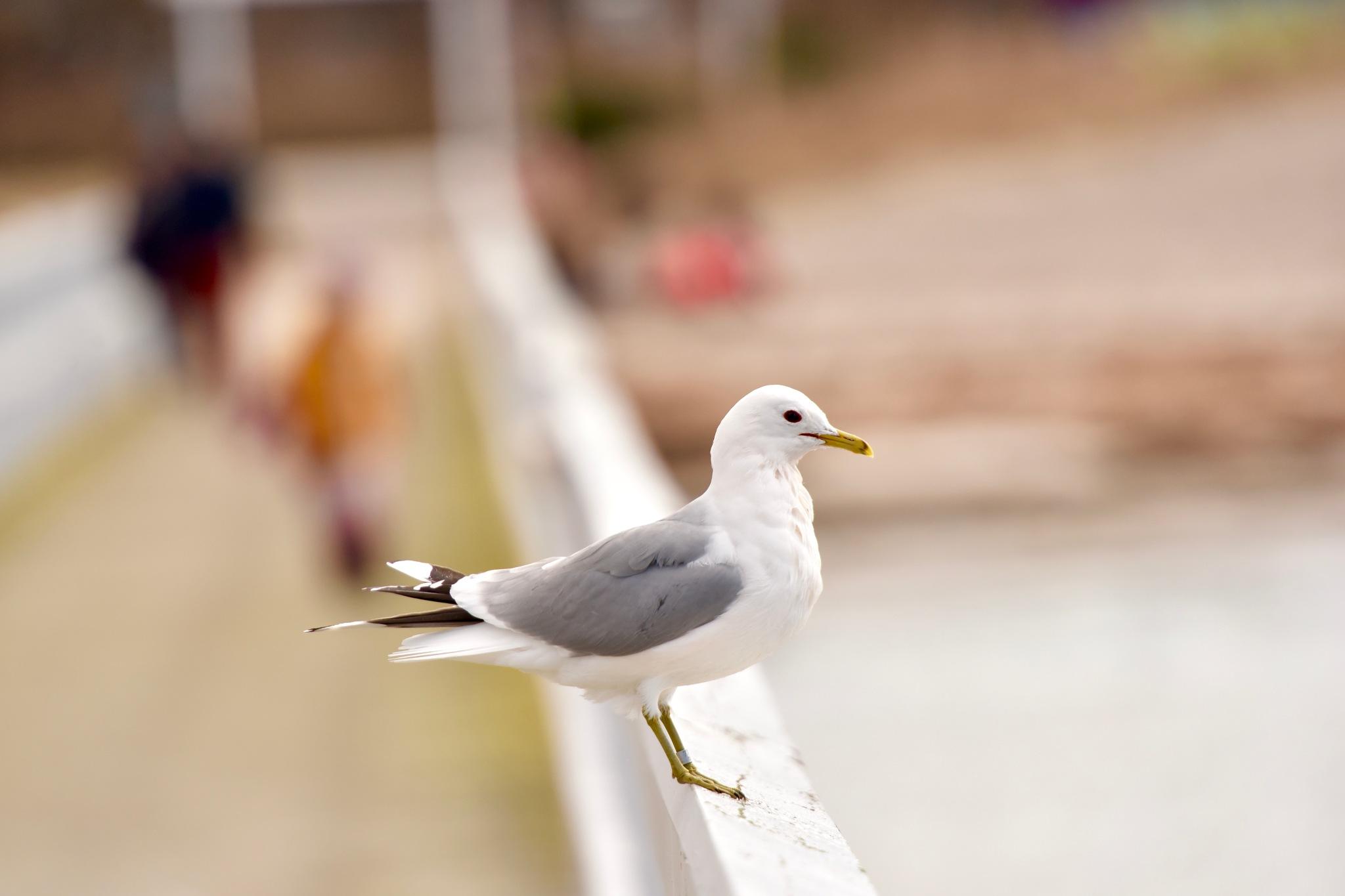 Bird 67! by Memed Bayatli
