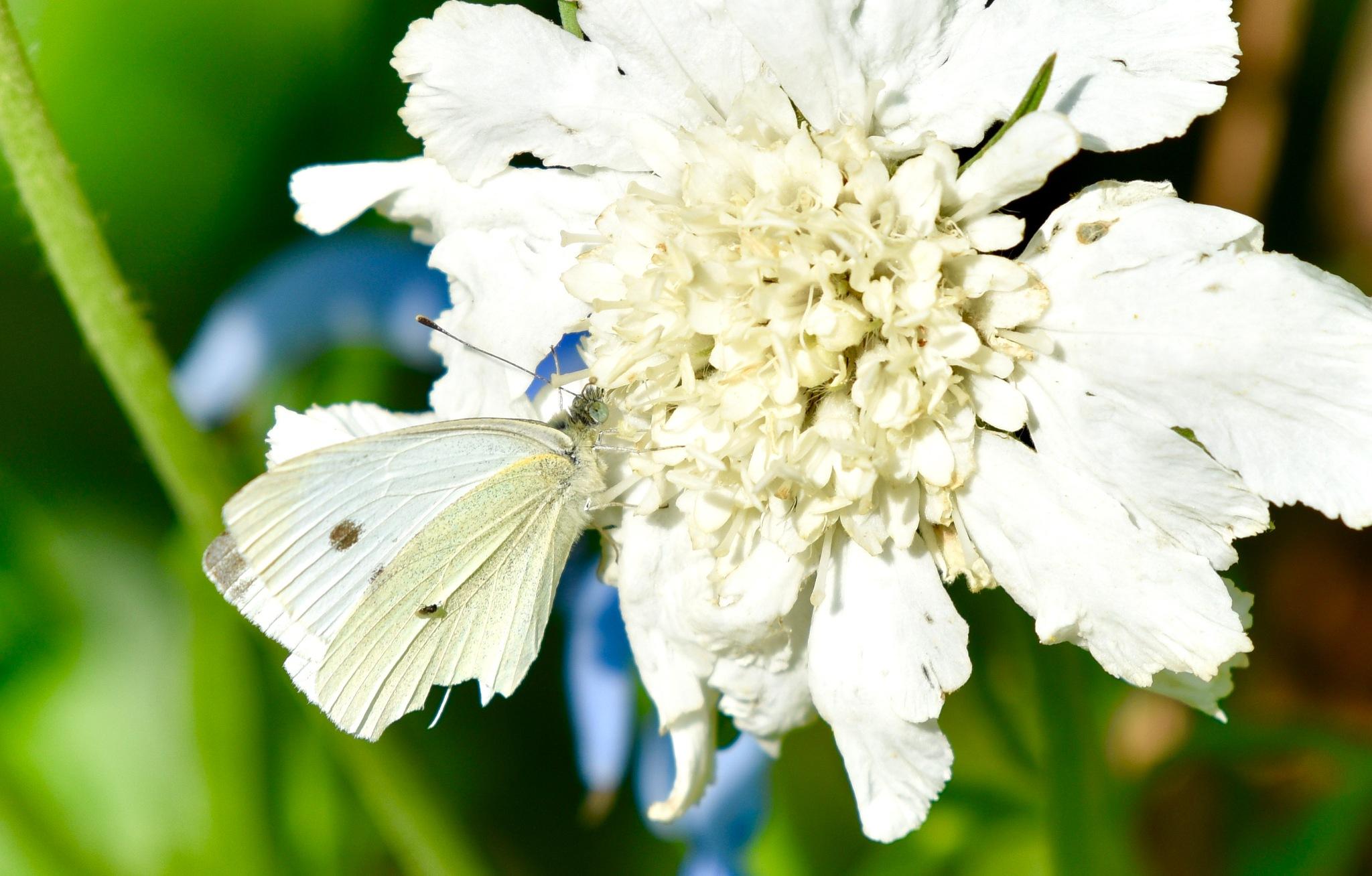 Butterfly 70! by Memed Bayatli