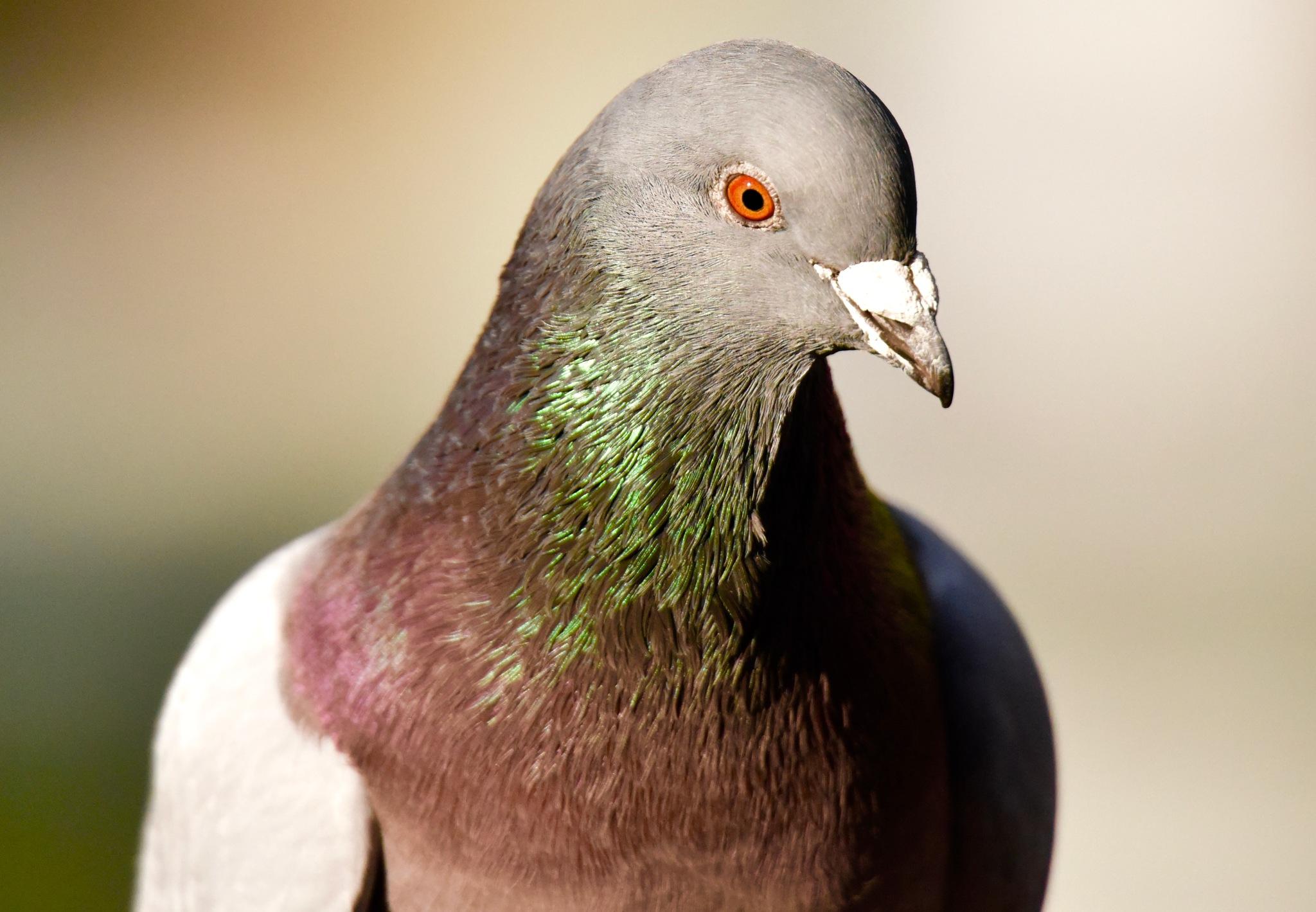 Bird 66! by Memed Bayatli