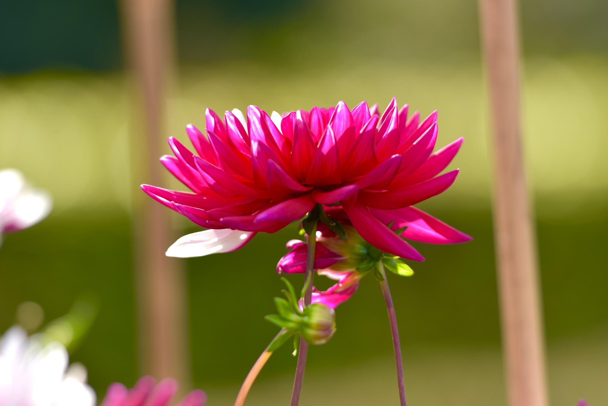 Flowers 7722! by Memed Bayatli