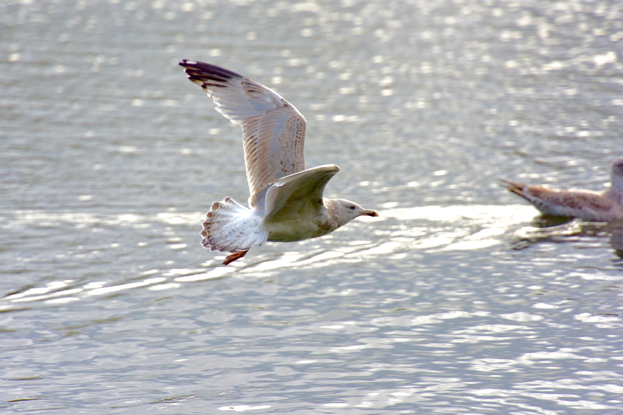 Bird 009! by Memed Bayatli