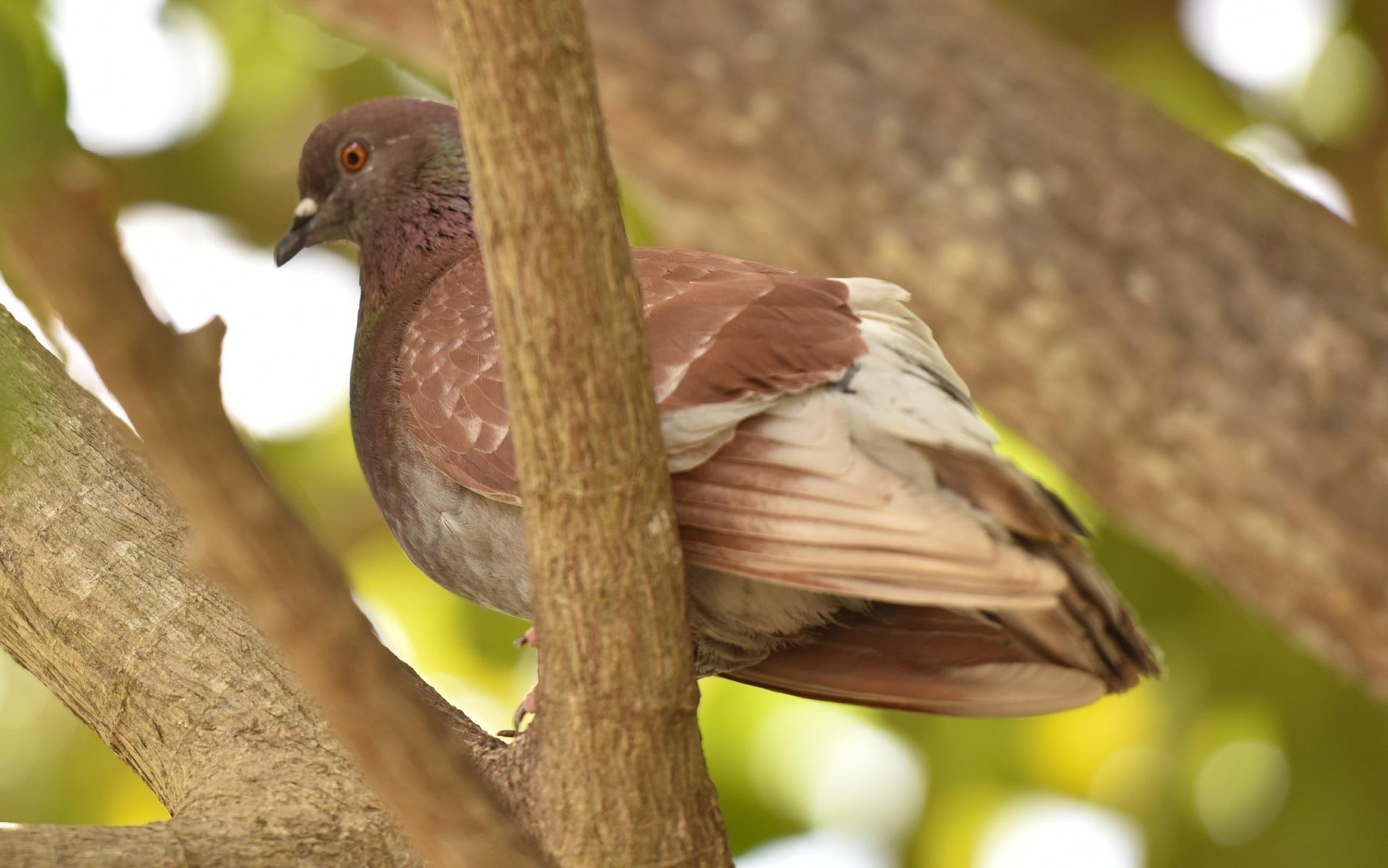 Bird 82! by Memed Bayatli