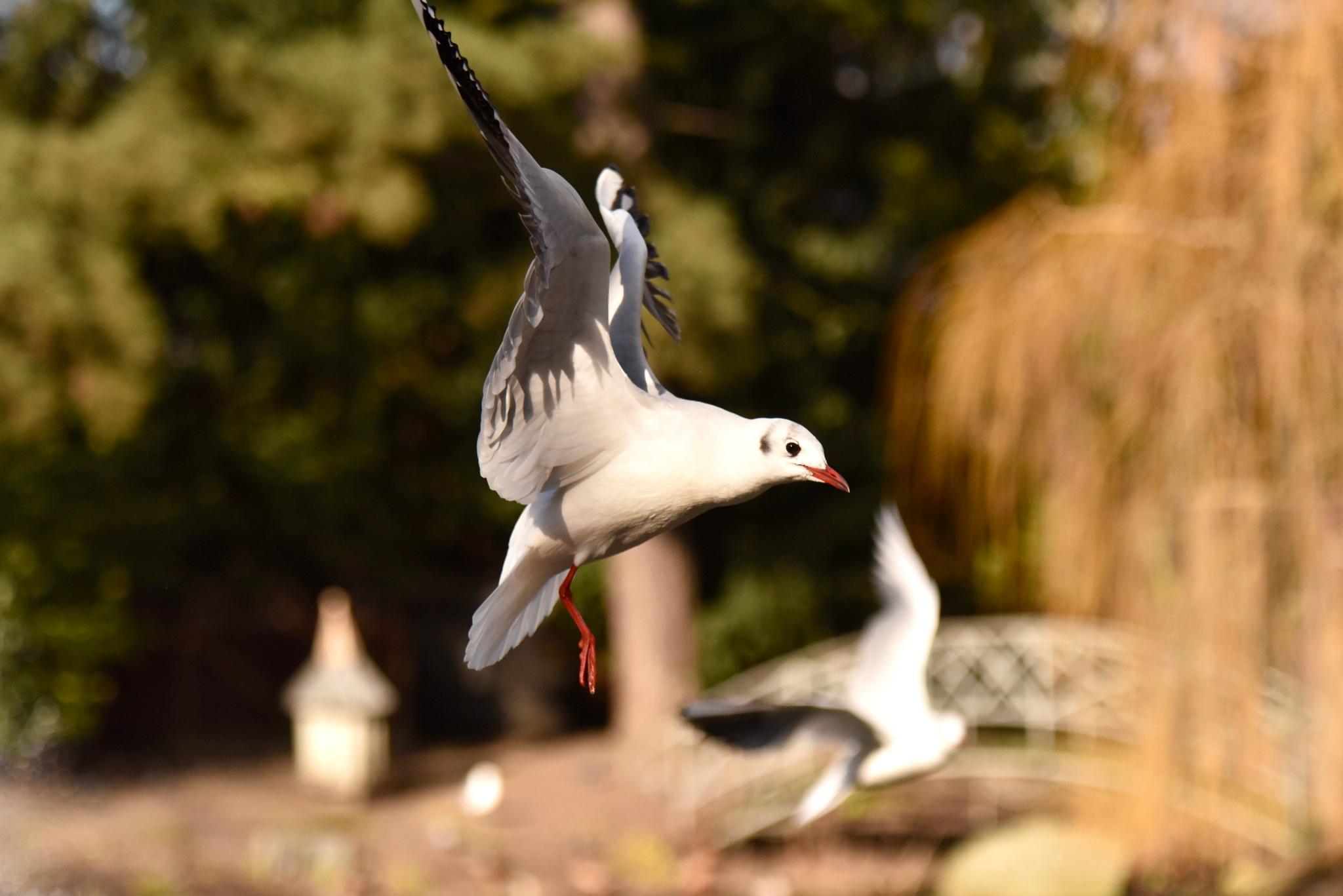 Bird 055! by Memed Bayatli
