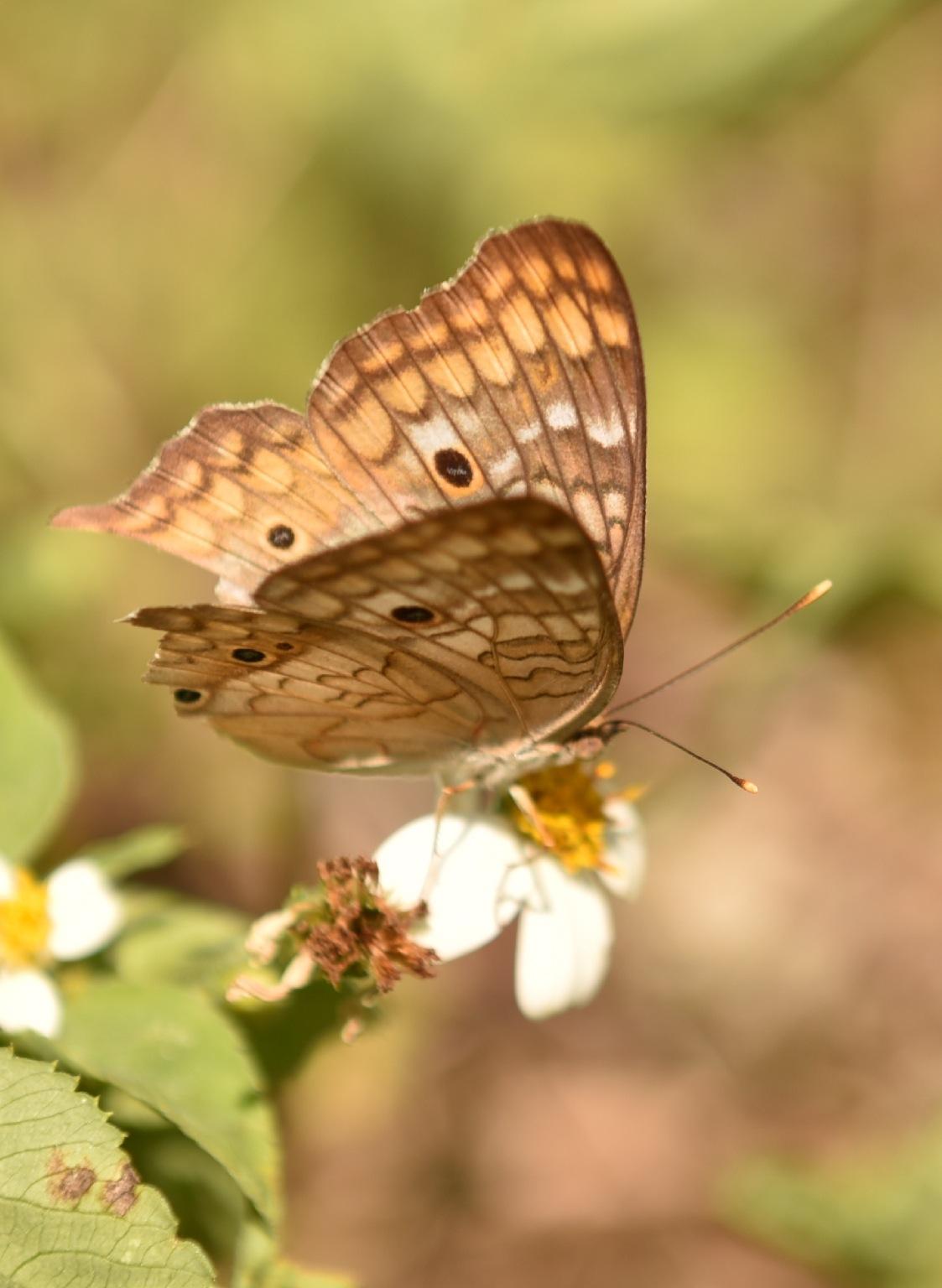 Butterfly 48! by Memed Bayatli