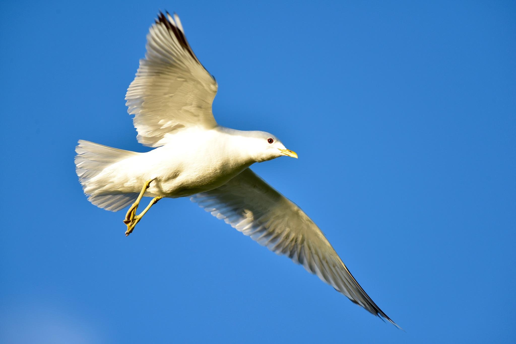 Bird 3399! by Memed Bayatli