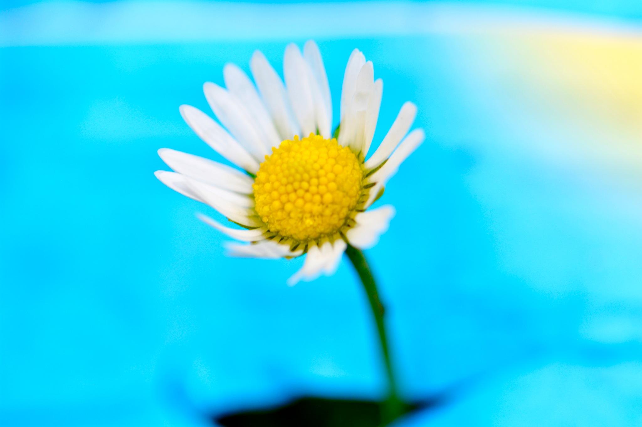 Flowers 4332! by Memed Bayatli