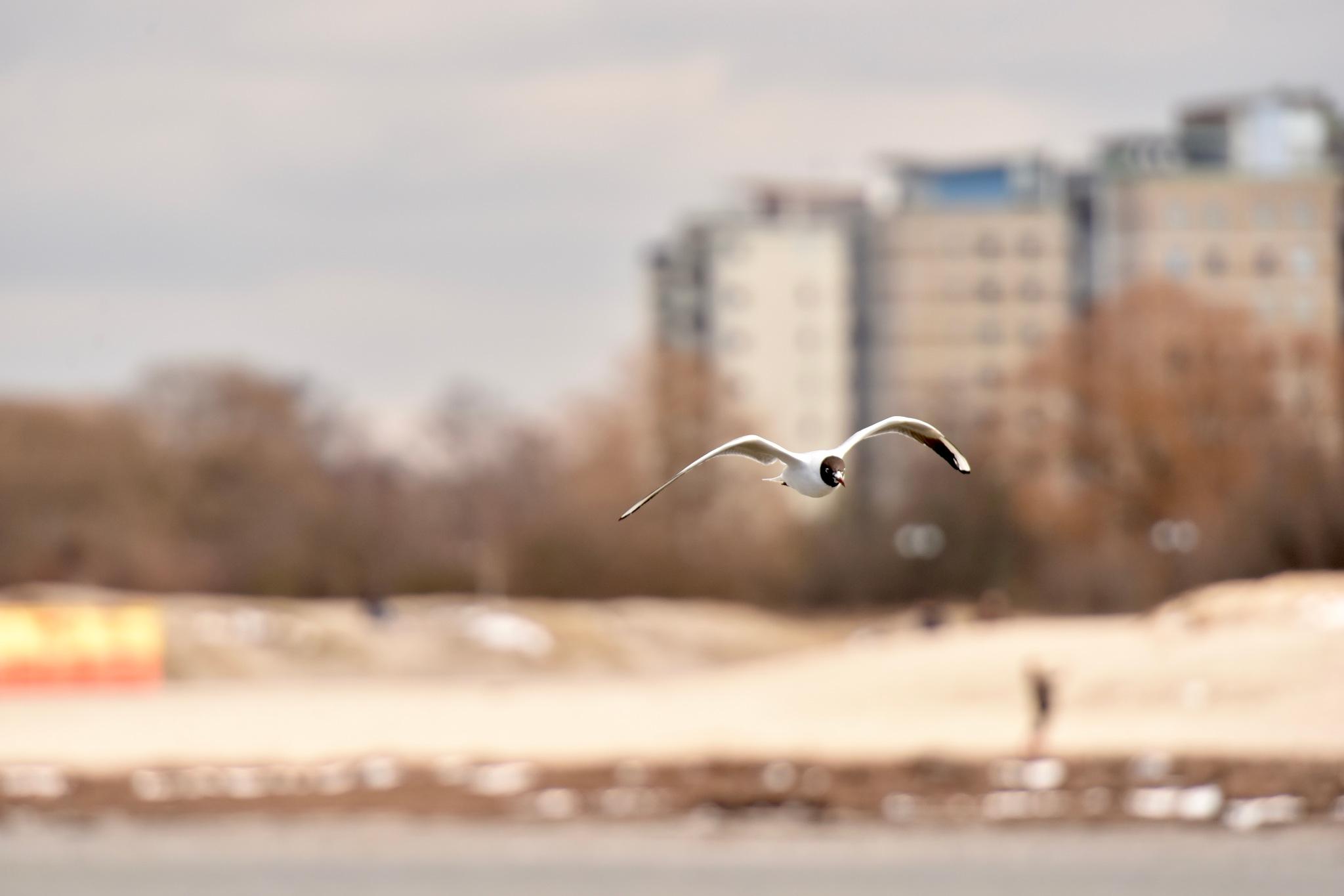 Bird 633! by Memed Bayatli