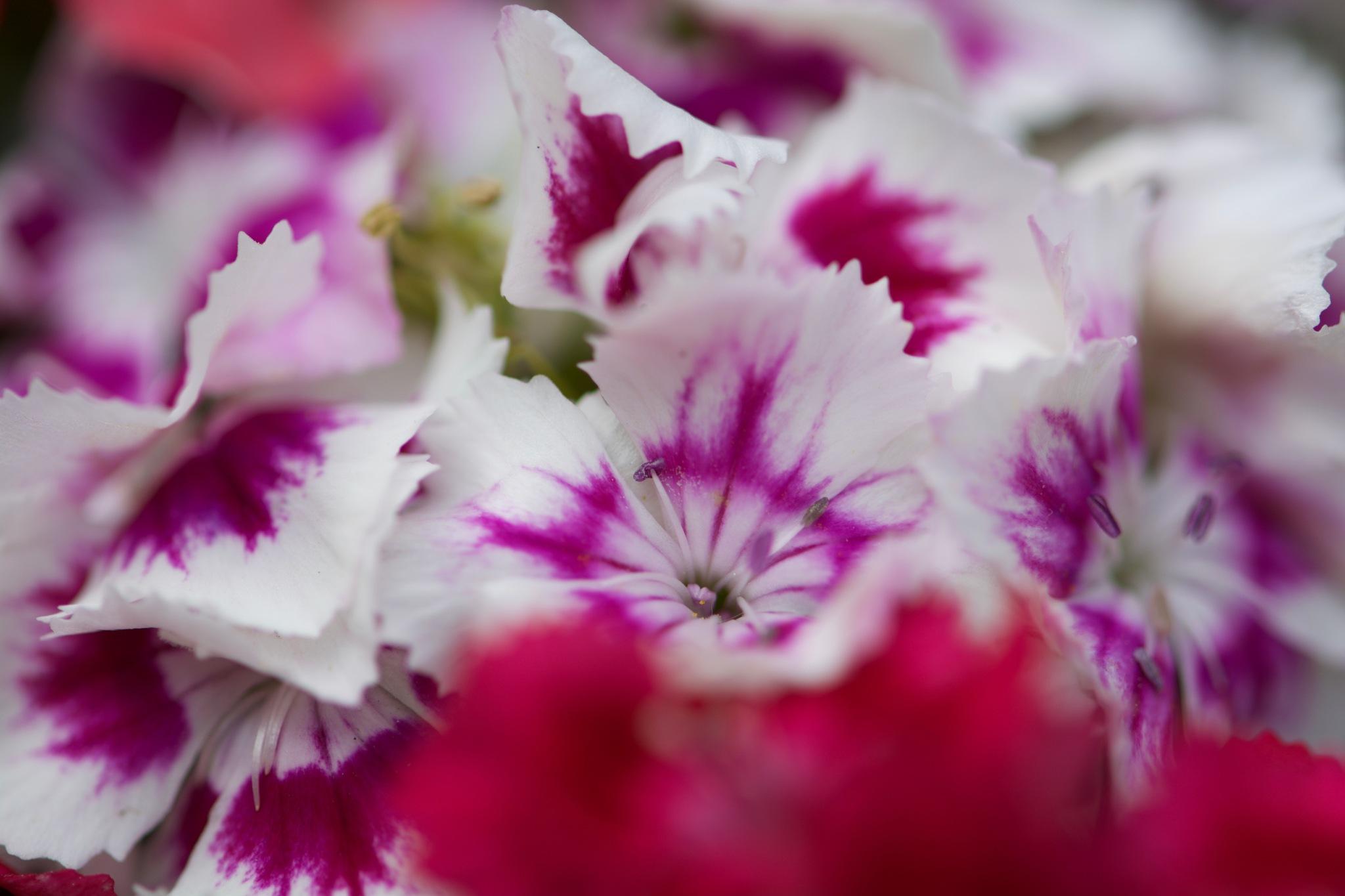 Flowers 138! by Memed Bayatli