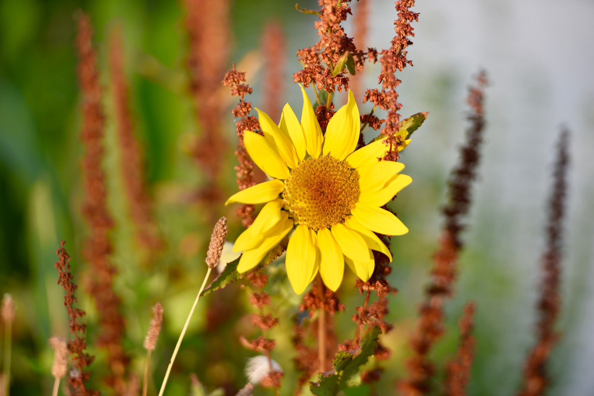 Flowers 884! by Memed Bayatli