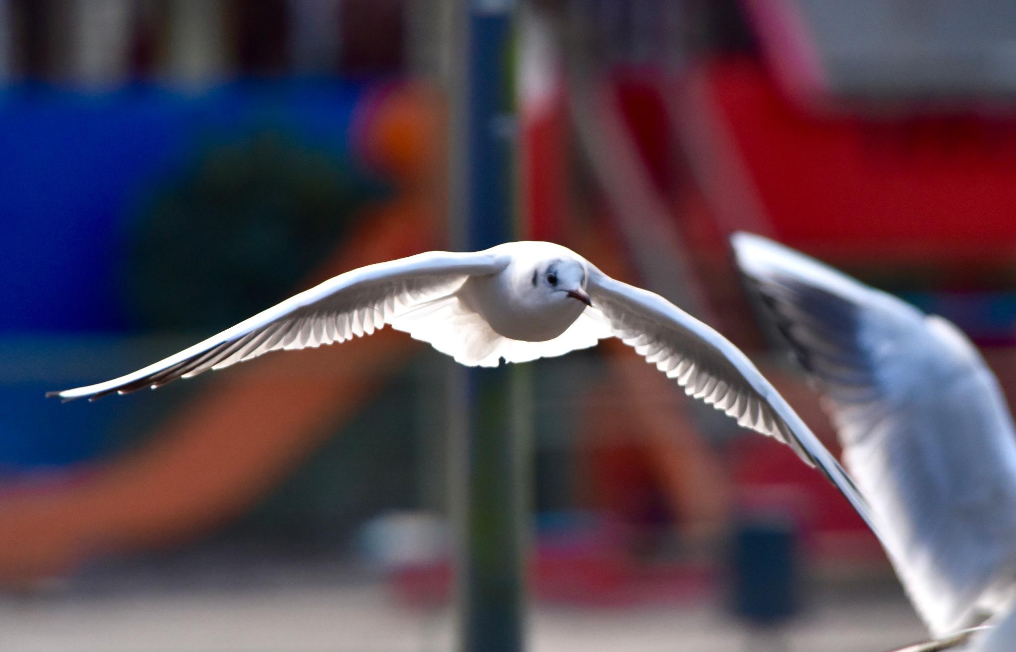 Bird 61! by Memed Bayatli