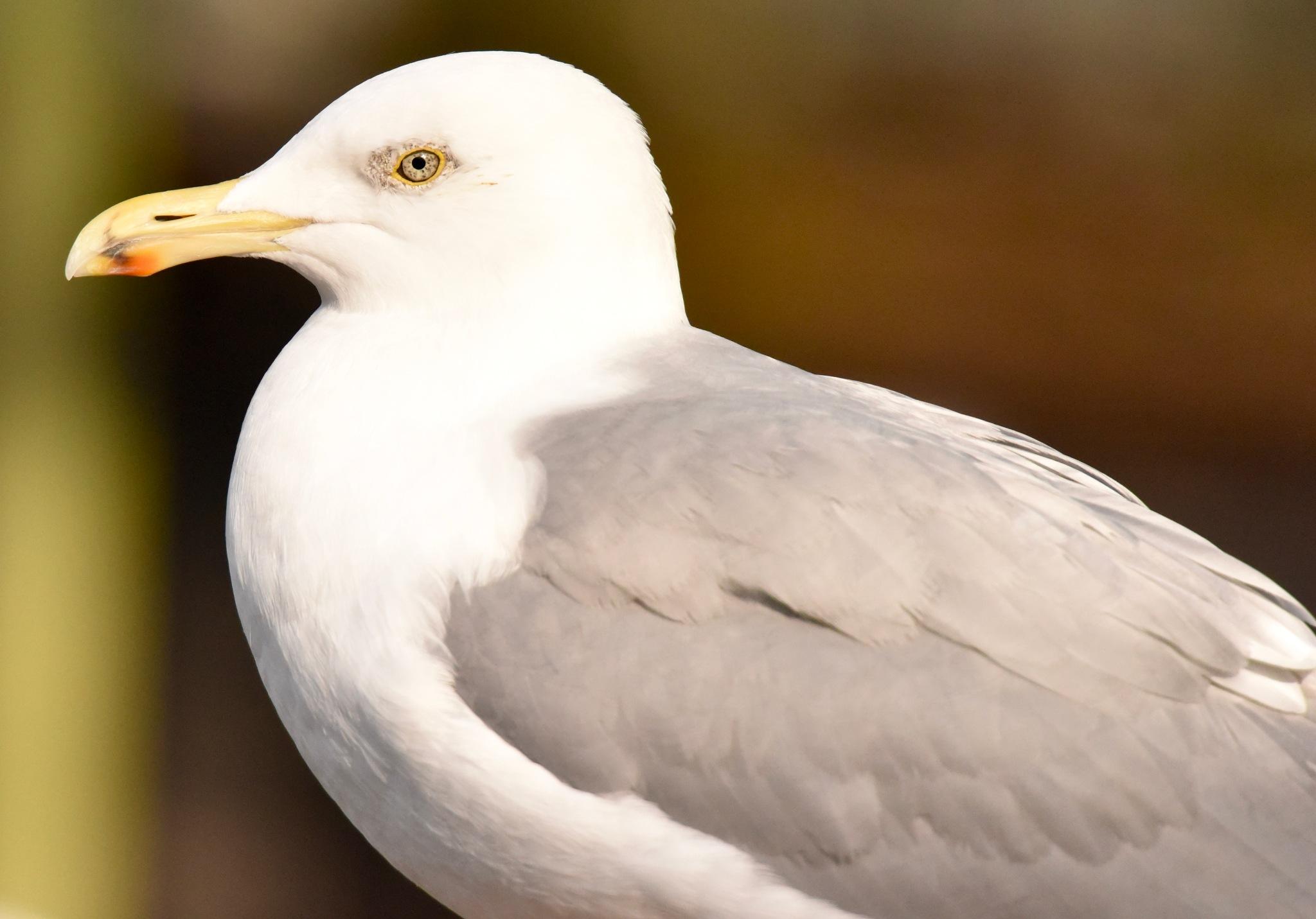 Bird 41! by Memed Bayatli