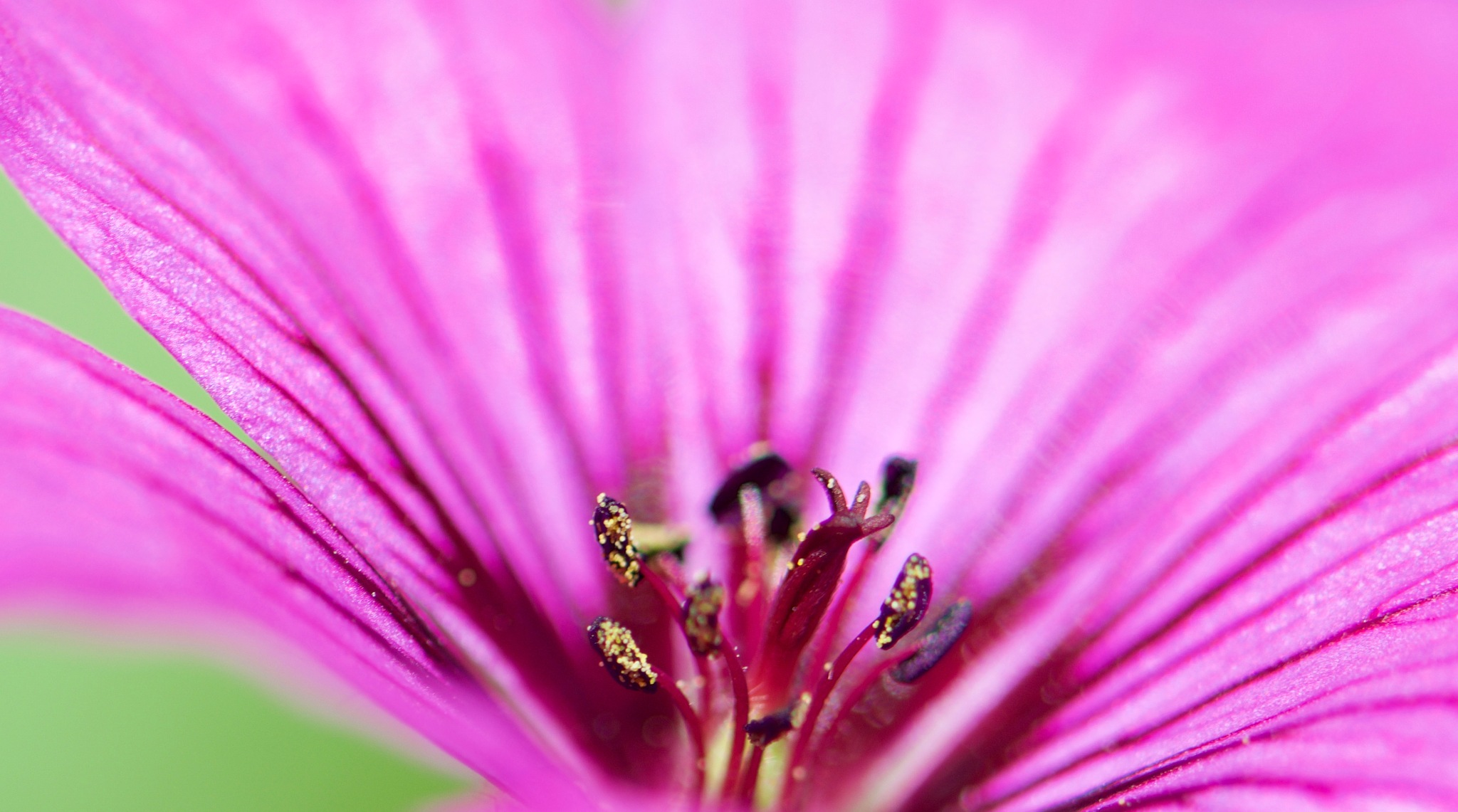 Macro Flowers 178! by Memed Bayatli