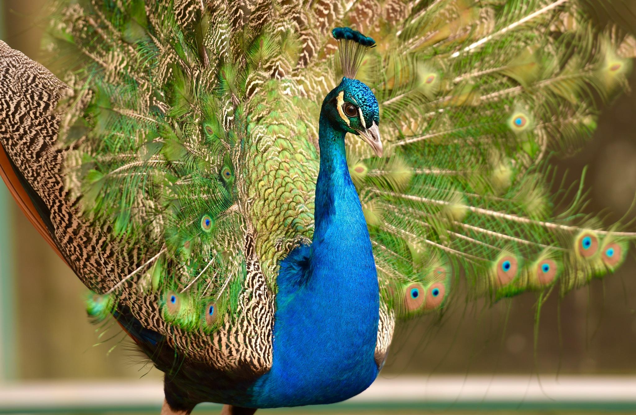 Bird 3! by Memed Bayatli