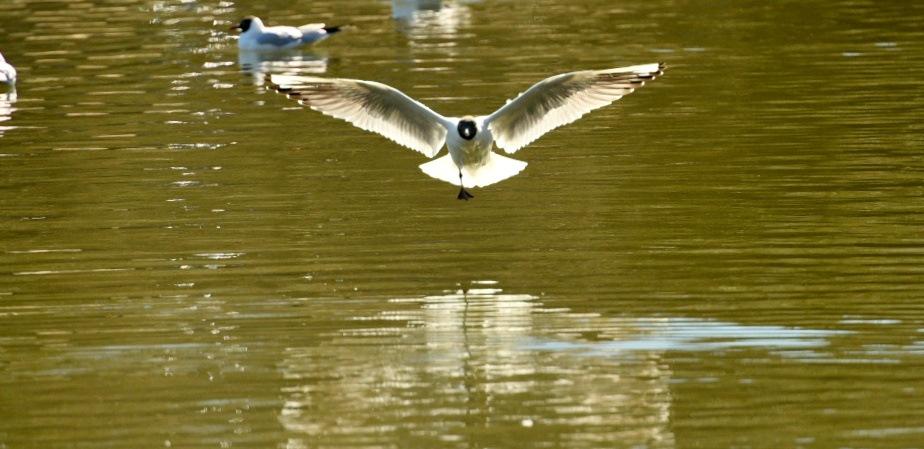 Flying Seagull 79! by Memed Bayatli