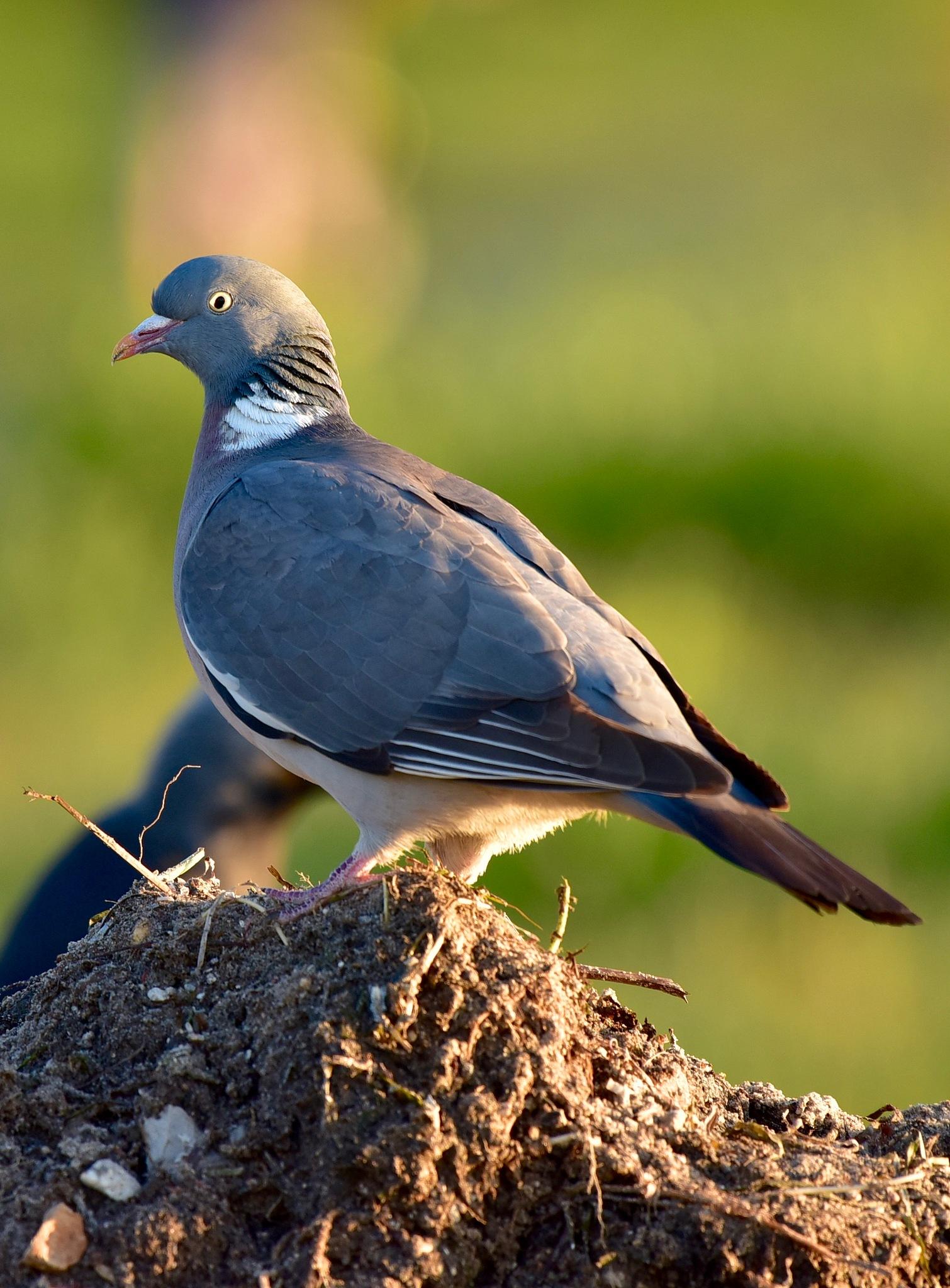 Bird 887! by Memed Bayatli