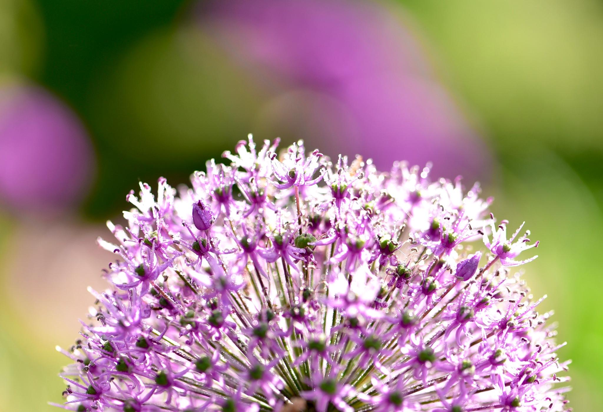 Macro flowers 400! by Memed Bayatli
