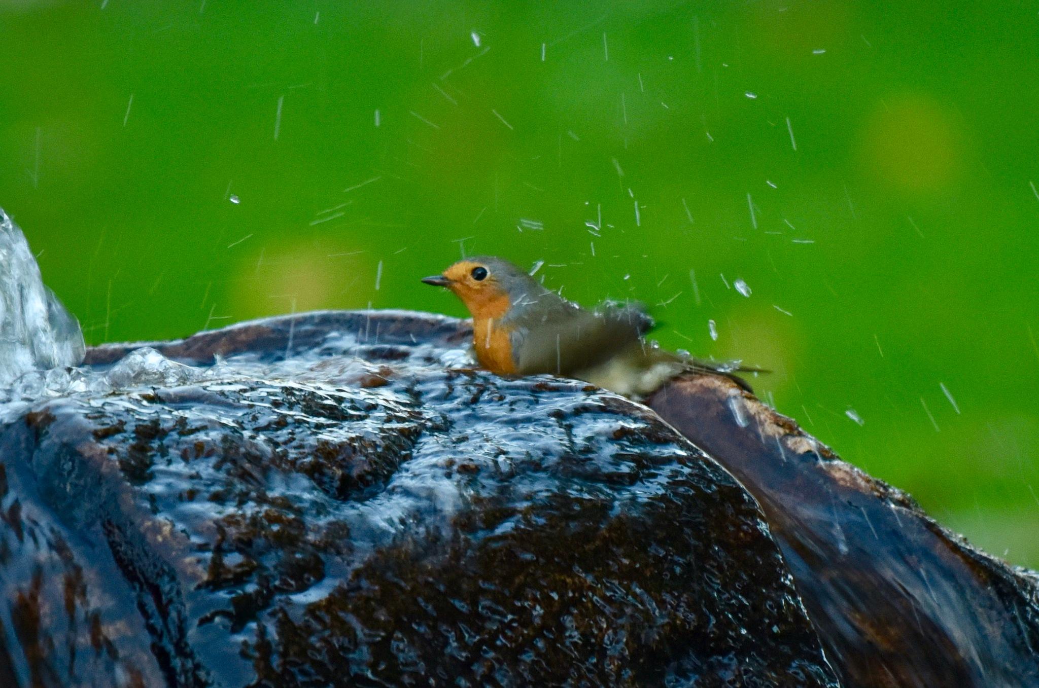 Bird 20091! by Memed Bayatli