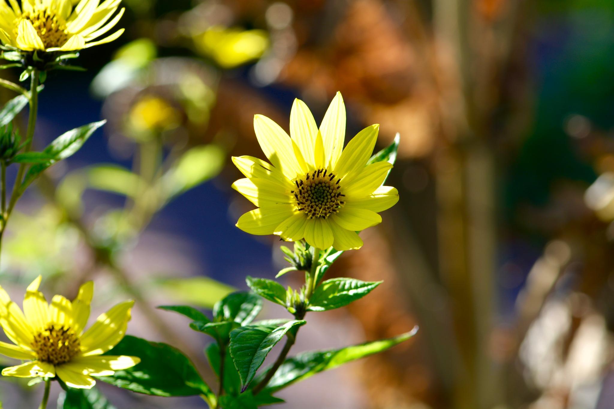 Flowers 344! by Memed Bayatli