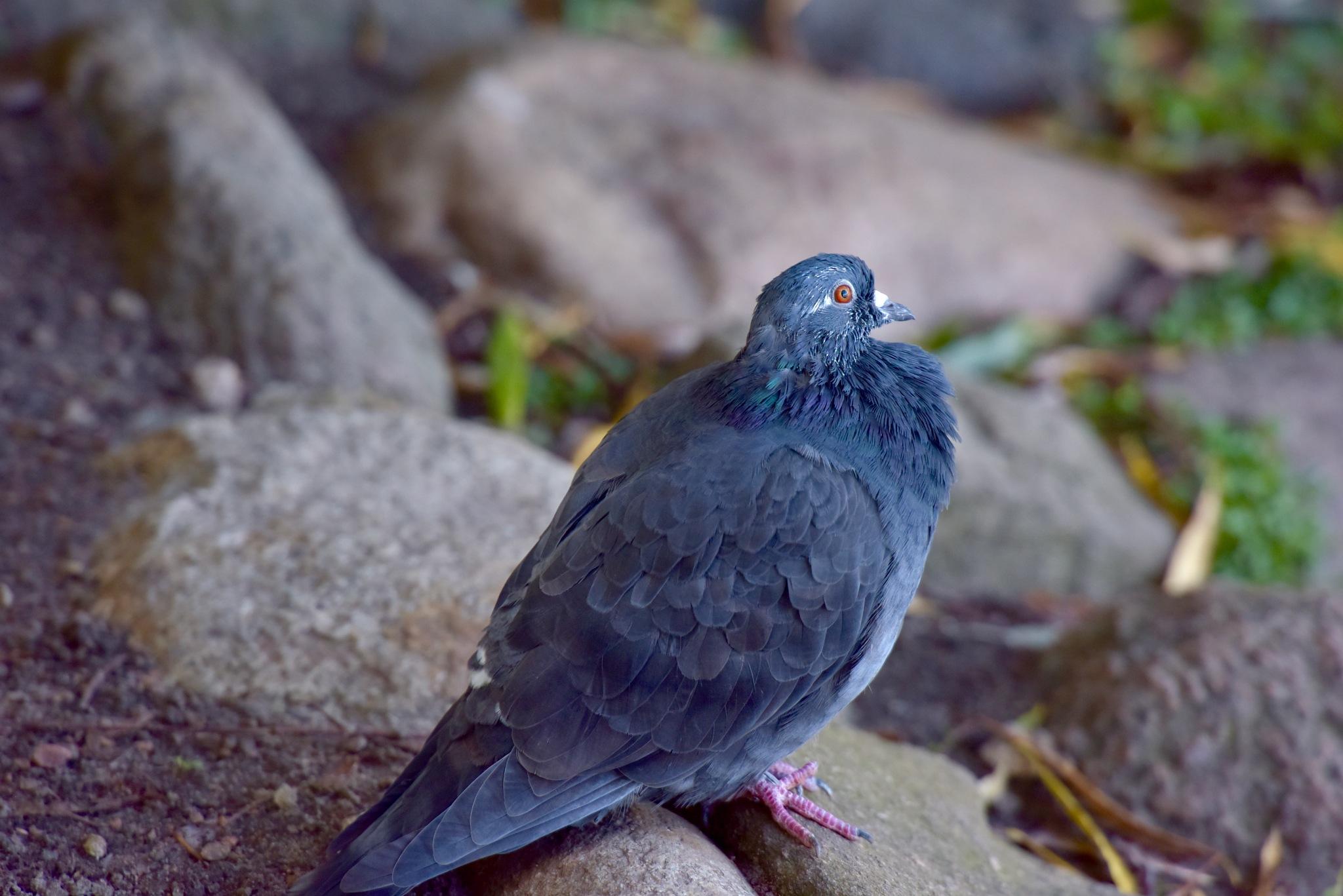 Bird 600! by Memed Bayatli