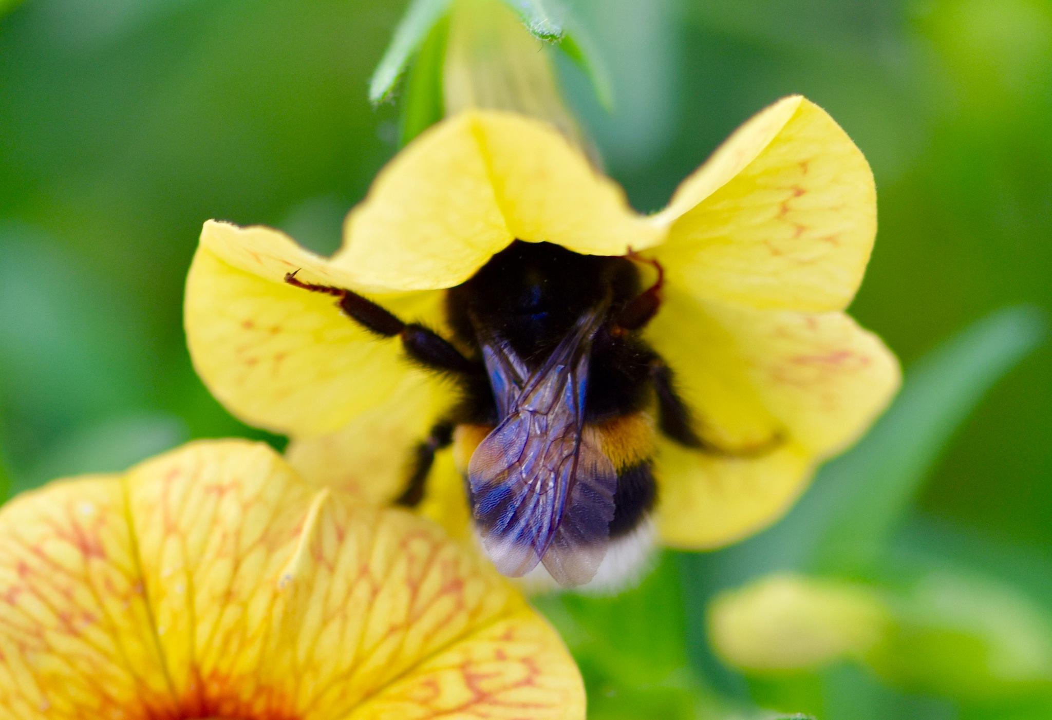 Bee 71 by Memed Bayatli
