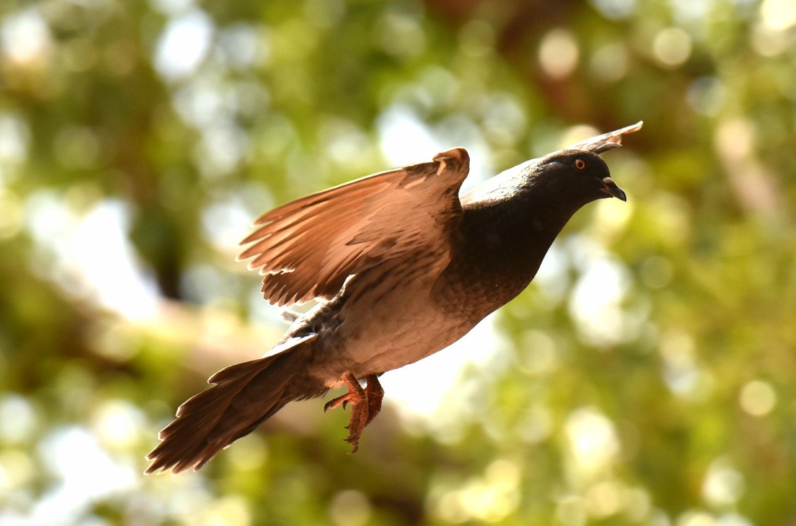 Bird Santo Domingo! by Memed Bayatli