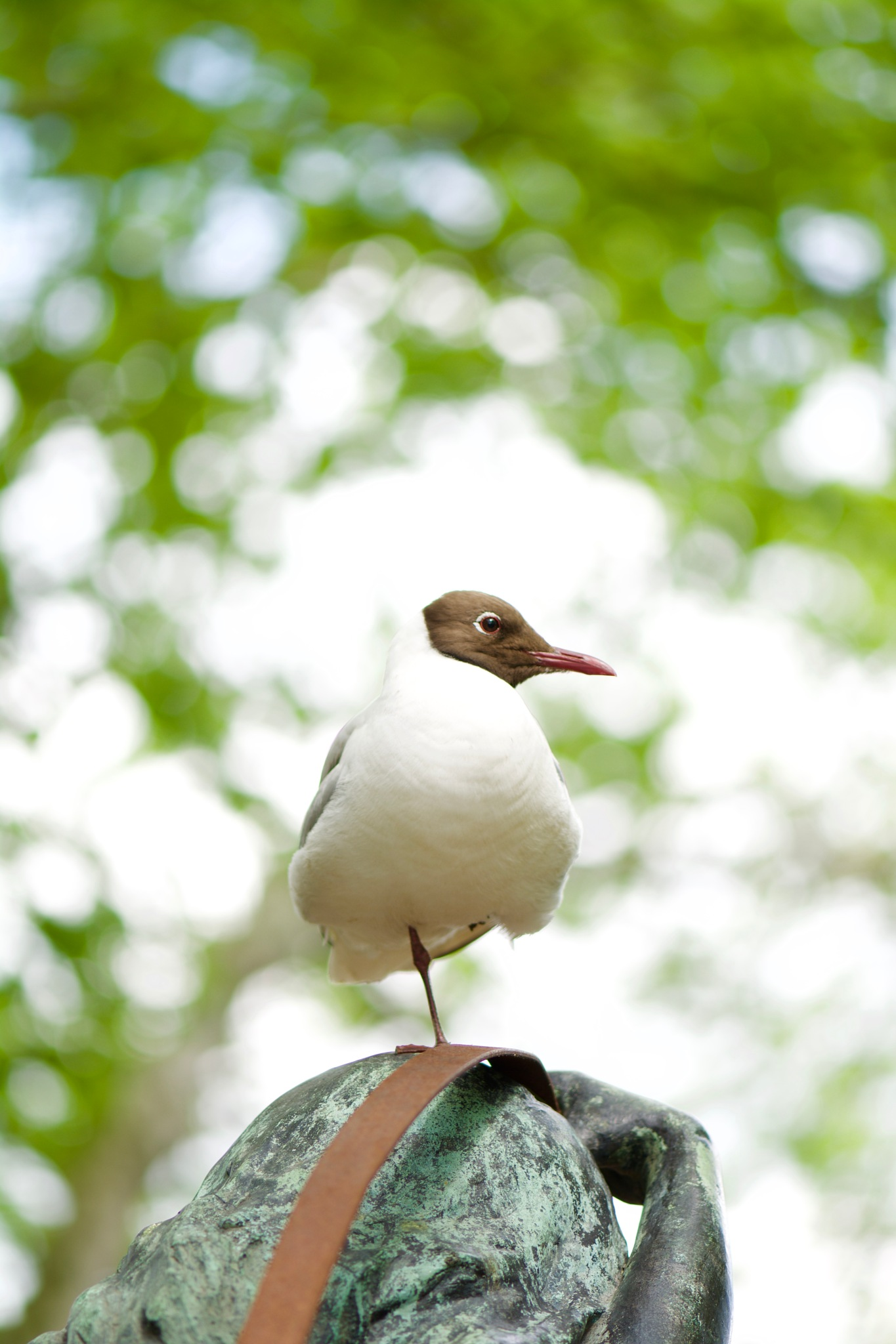 Bird 144! by Memed Bayatli