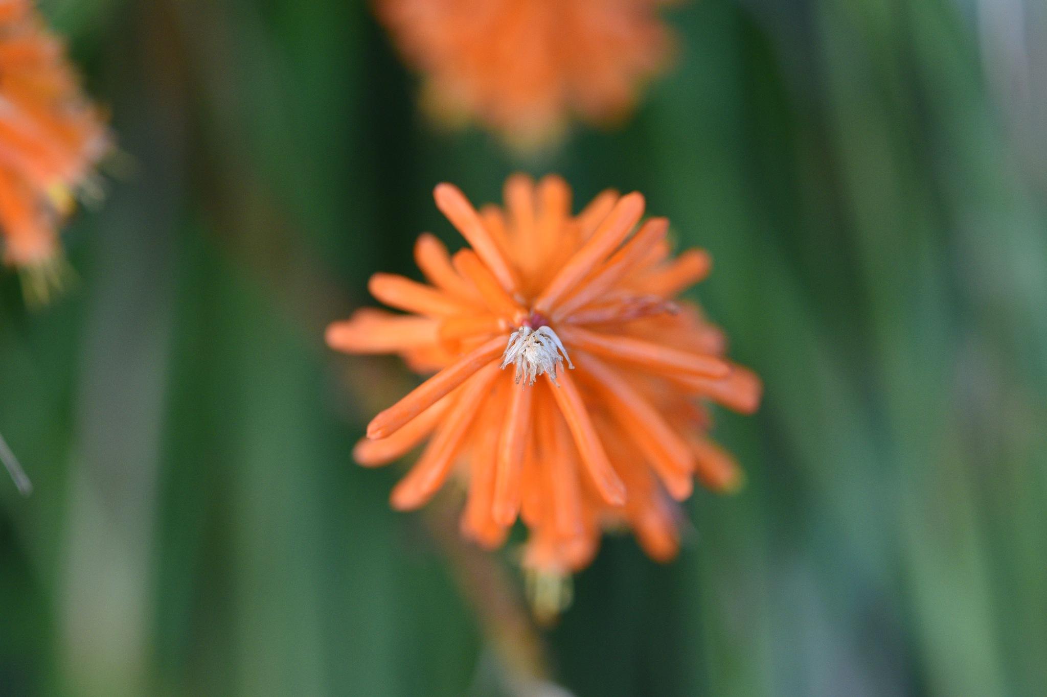 Flowers 511! by Memed Bayatli