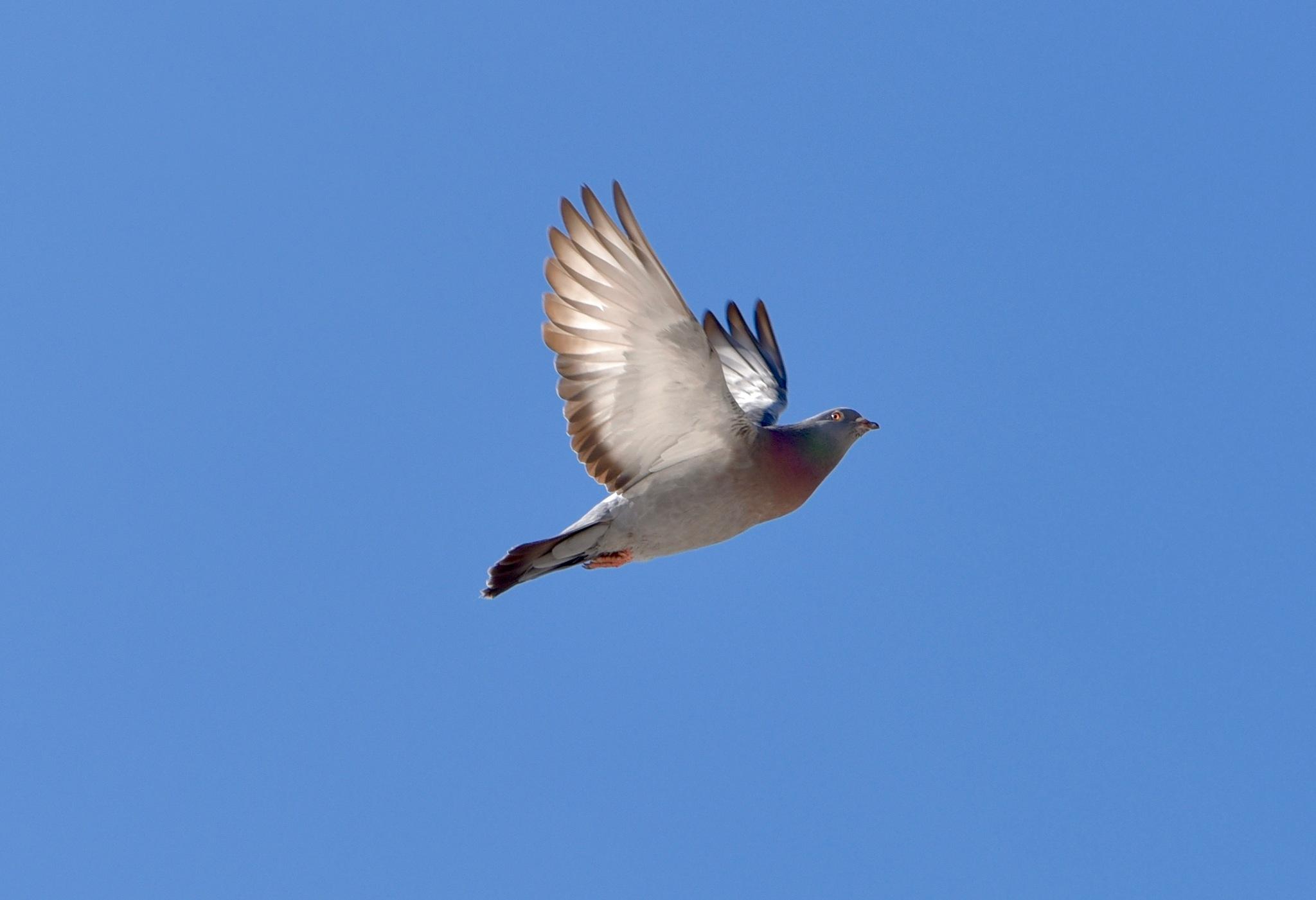 Bird 32! by Memed Bayatli