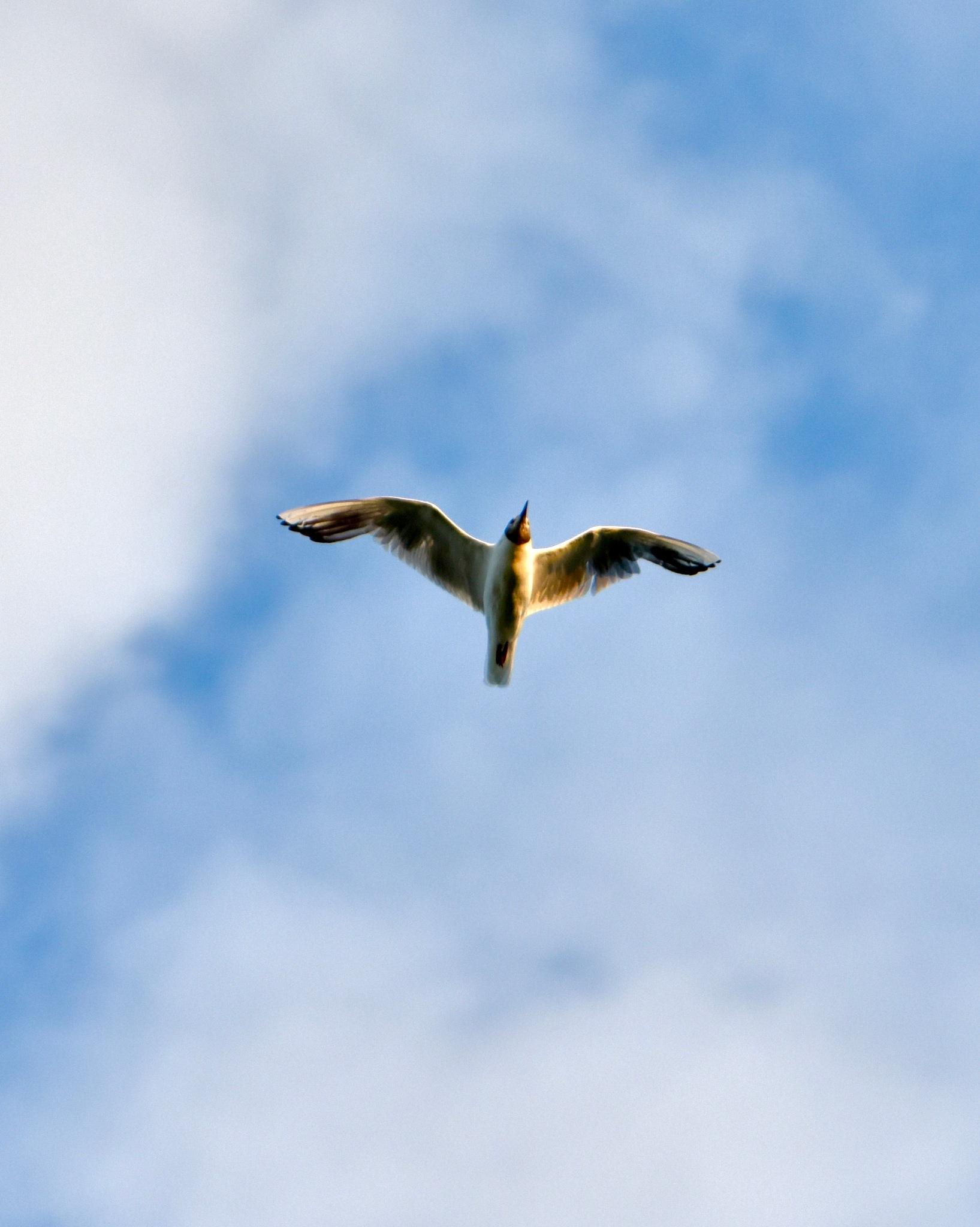 Bird 477! by Memed Bayatli