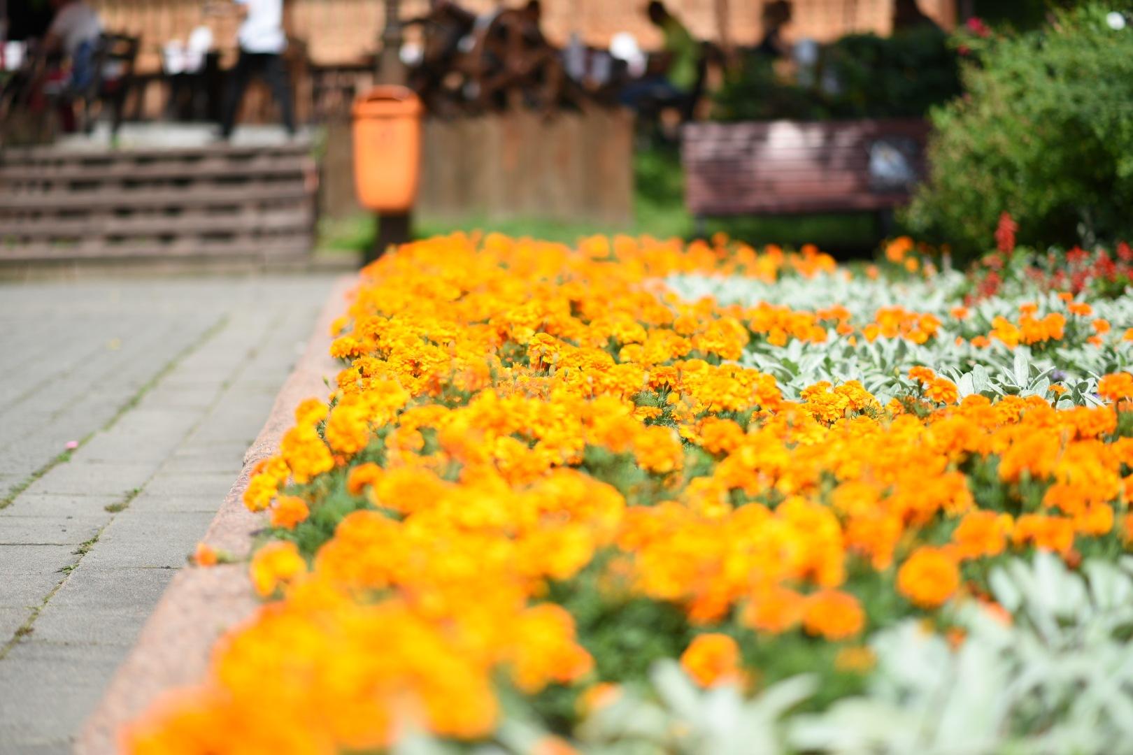 Flowers 551! by Memed Bayatli