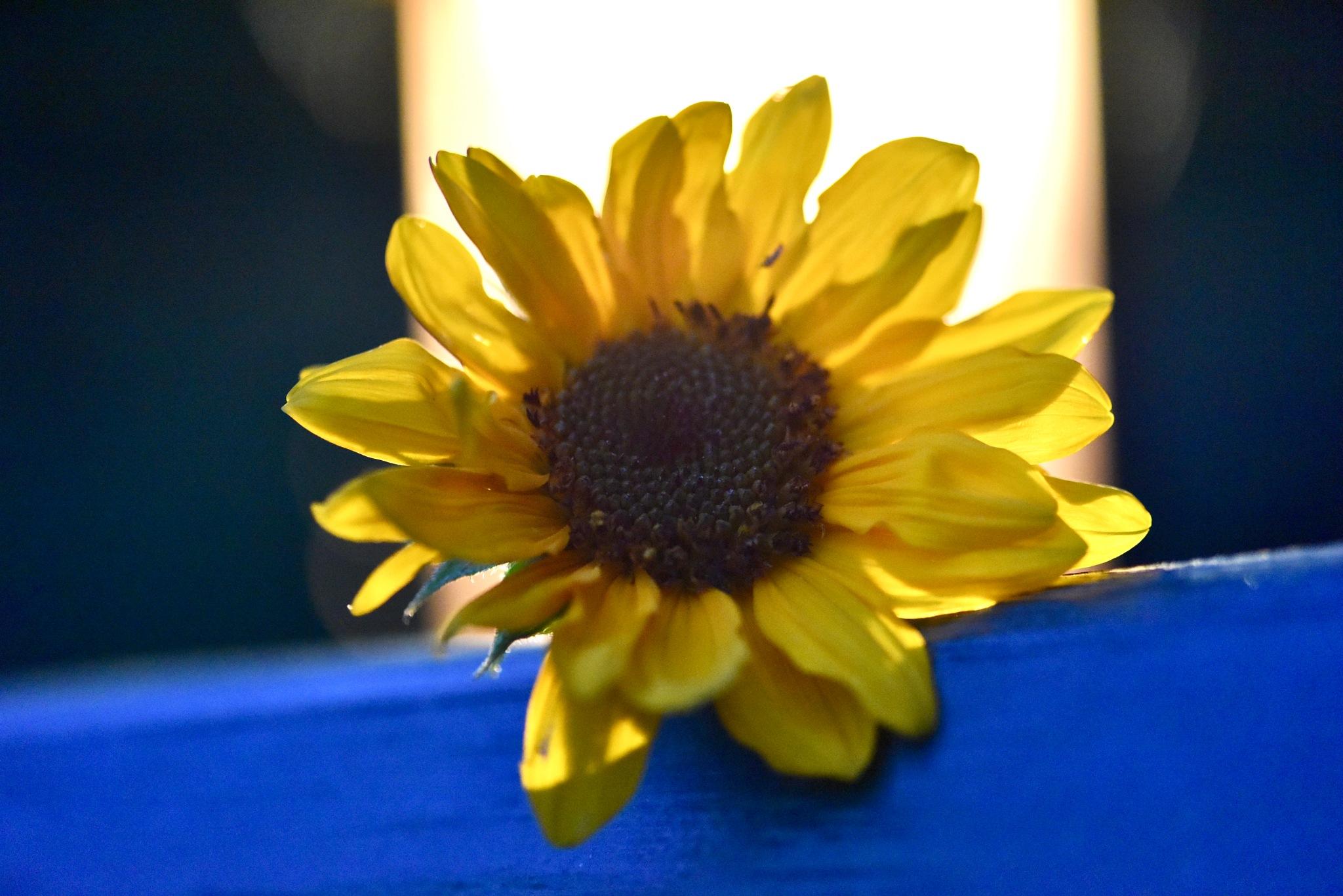 Sunflower 6! by Memed Bayatli