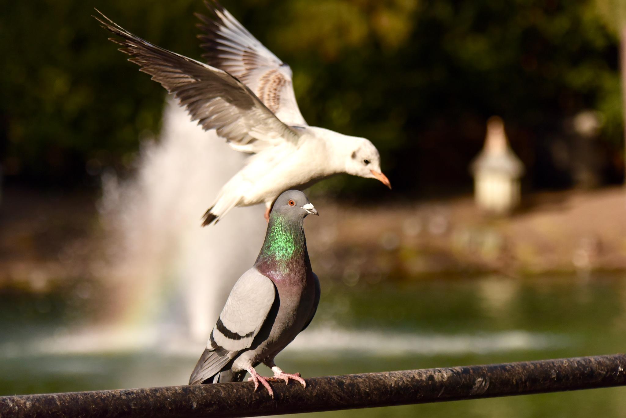 Bird 089! by Memed Bayatli