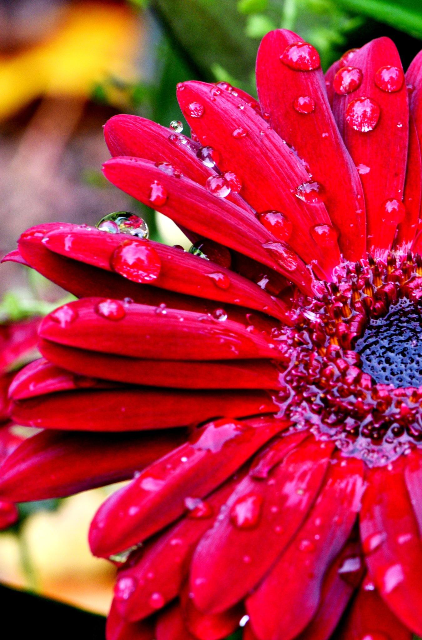 Drop flowers!  by Memed Bayatli