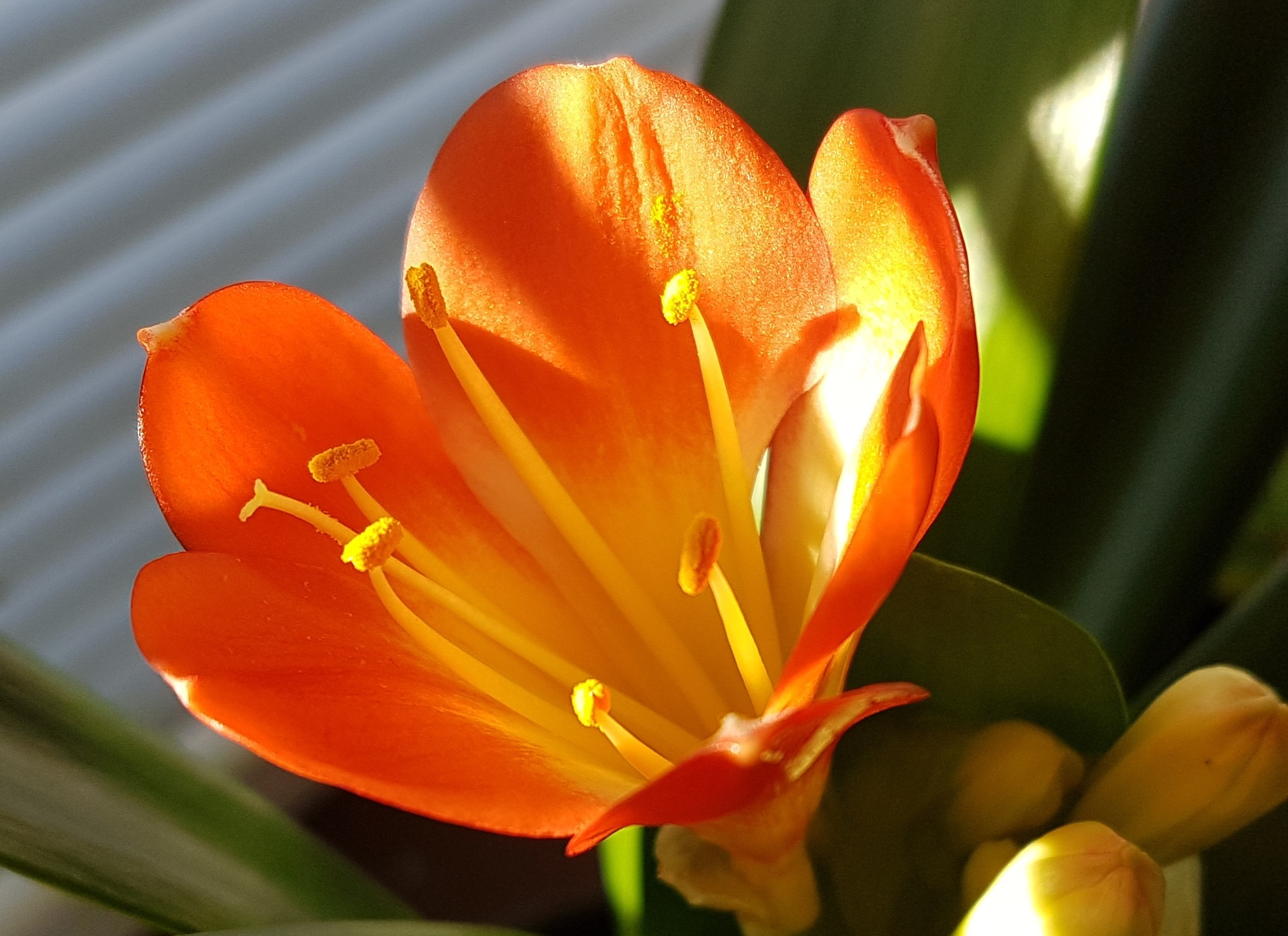 Flowers 57! by Memed Bayatli
