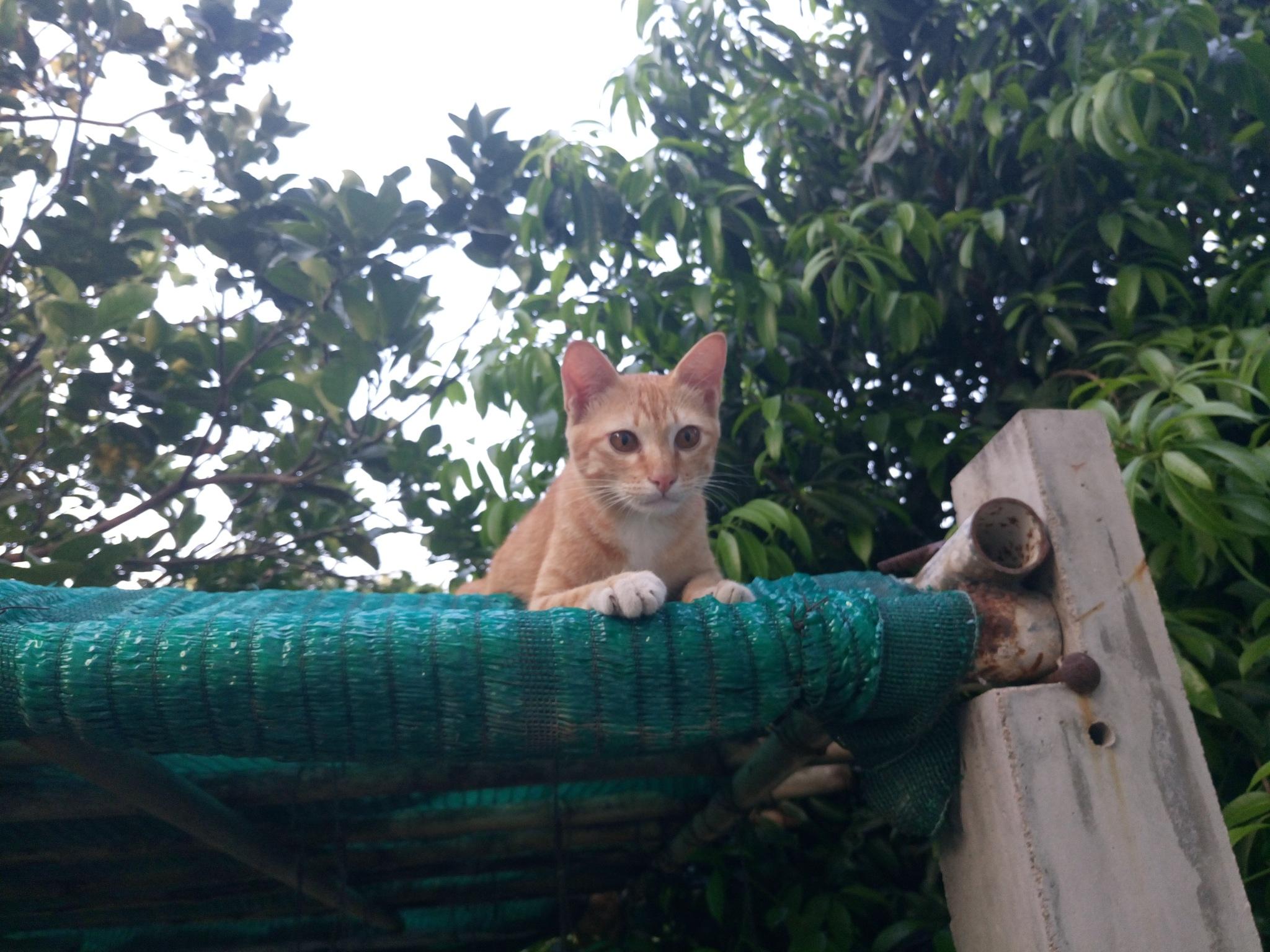 Cat by SolomonEz
