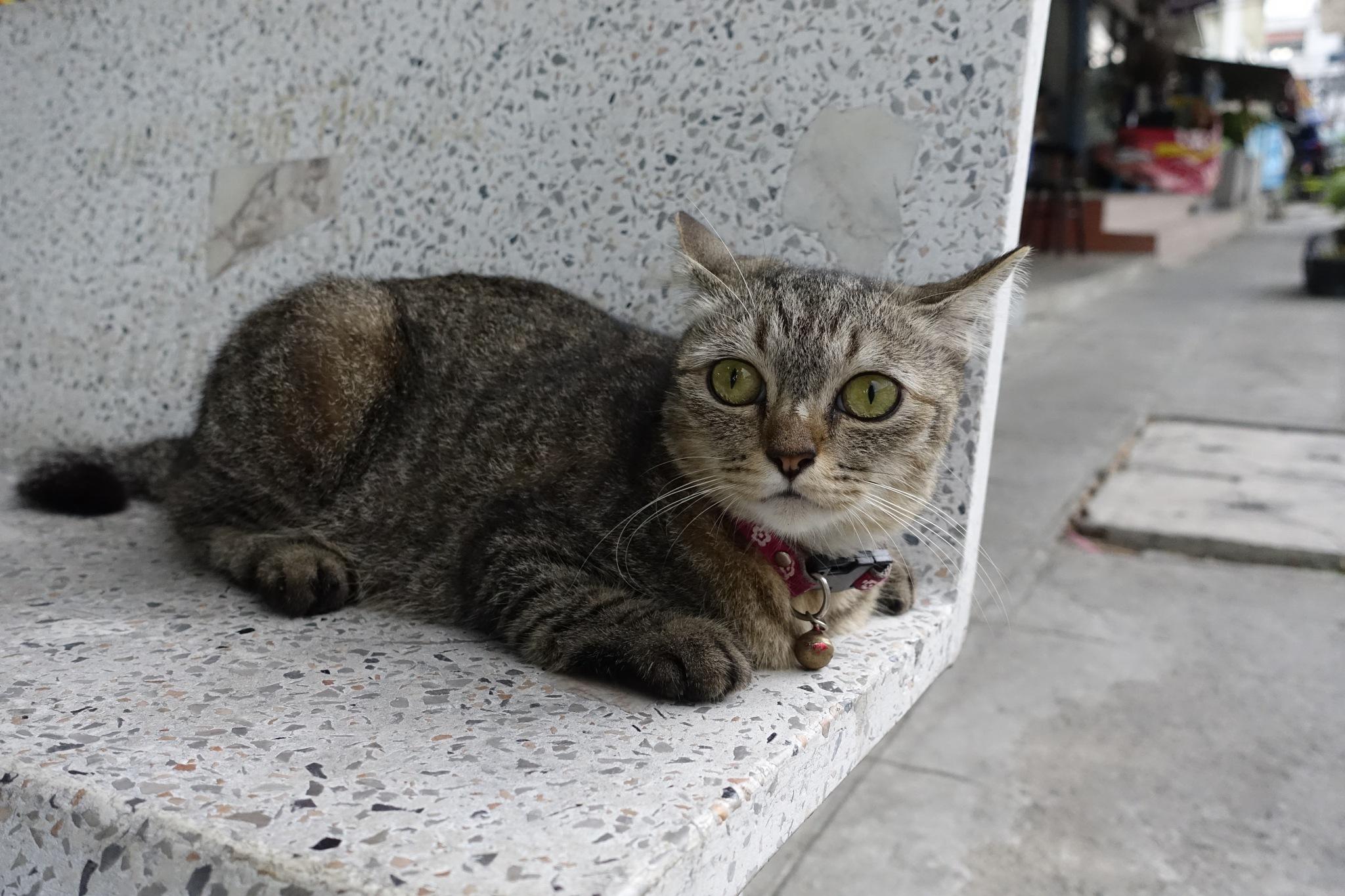 Street Cat  by SolomonEz